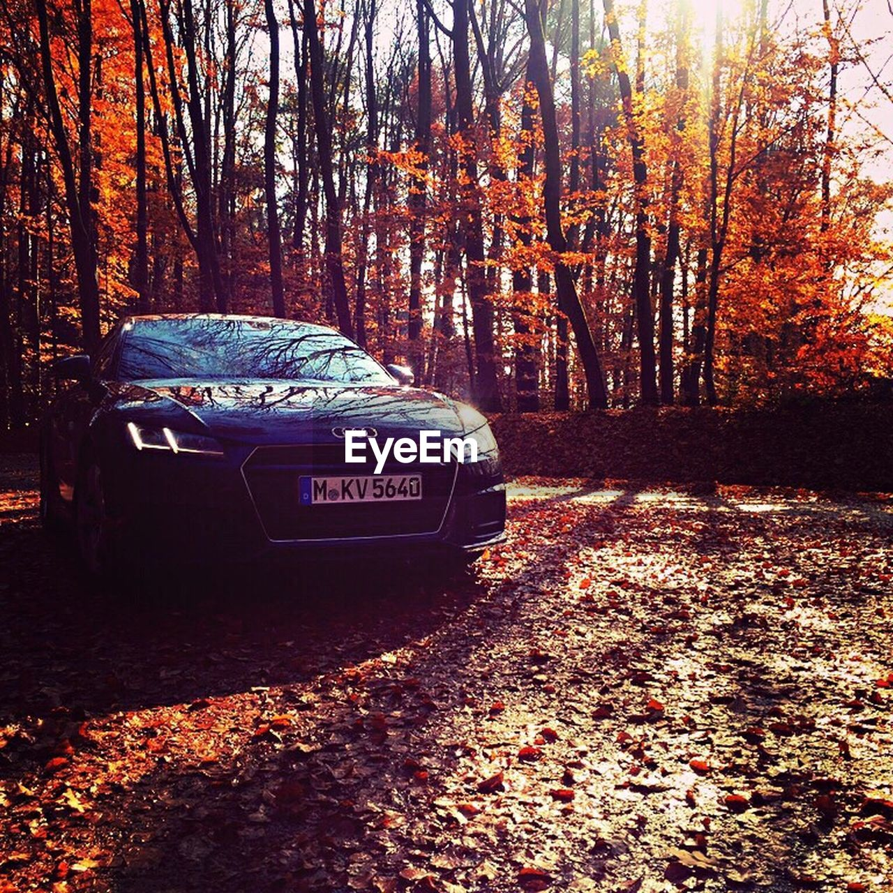 autumn, tree, change, car, leaf, forest, transportation, sunlight, land vehicle, outdoors, day, no people, nature, tree trunk