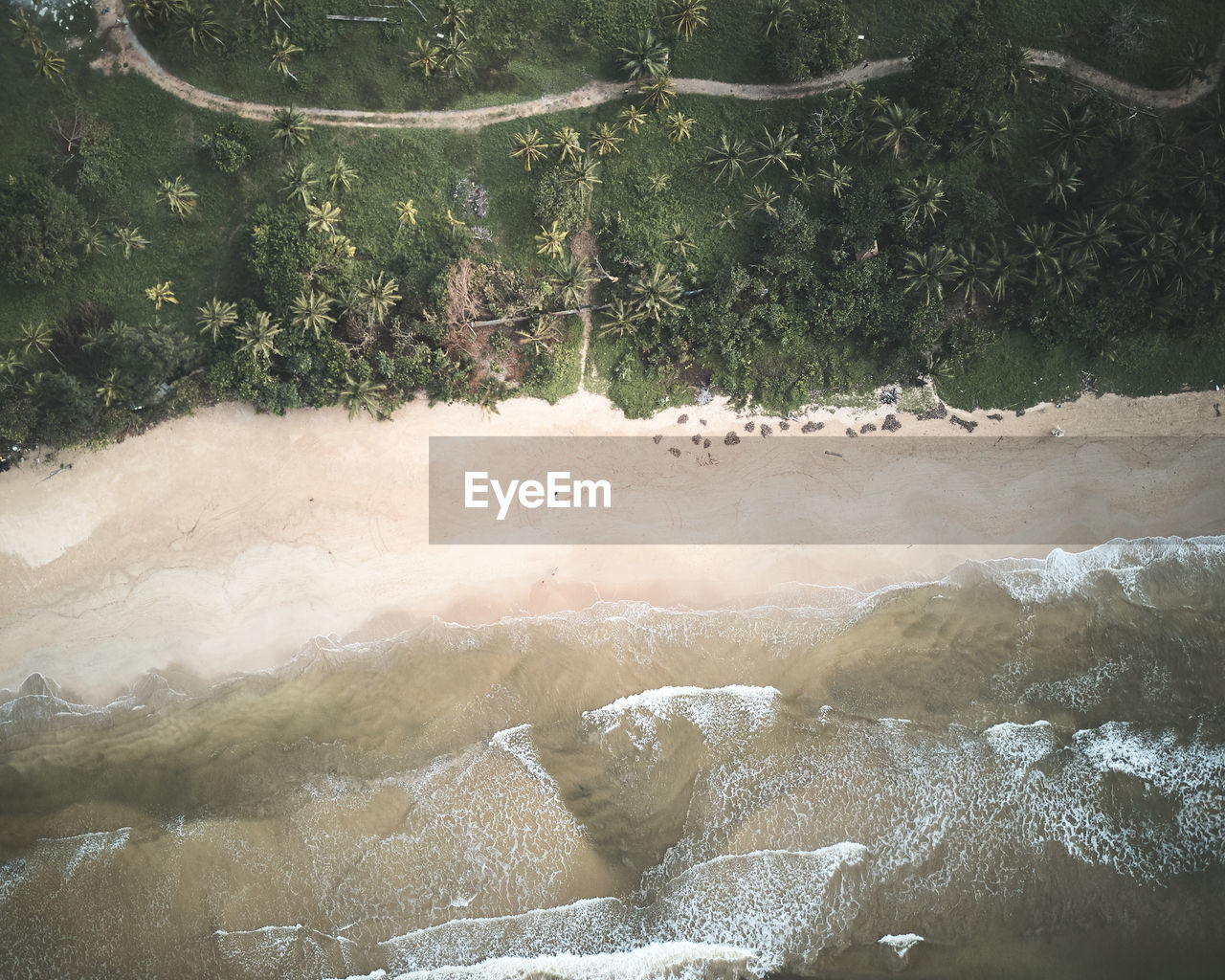 Aerial view of beach with trees