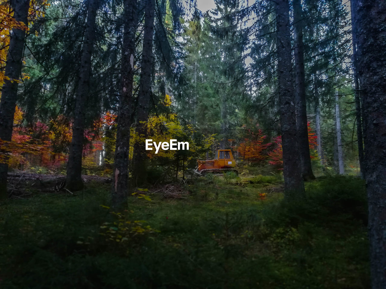 TREES ON FOREST DURING AUTUMN