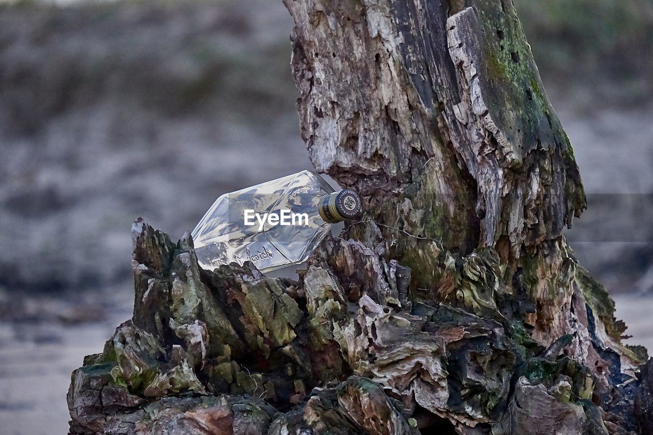 focus on foreground, trunk, tree trunk, tree, close-up, day, plant, nature, no people, textured, animal, wood - material, outdoors, animal themes, animal wildlife, animals in the wild, rough, bark, selective focus, rock