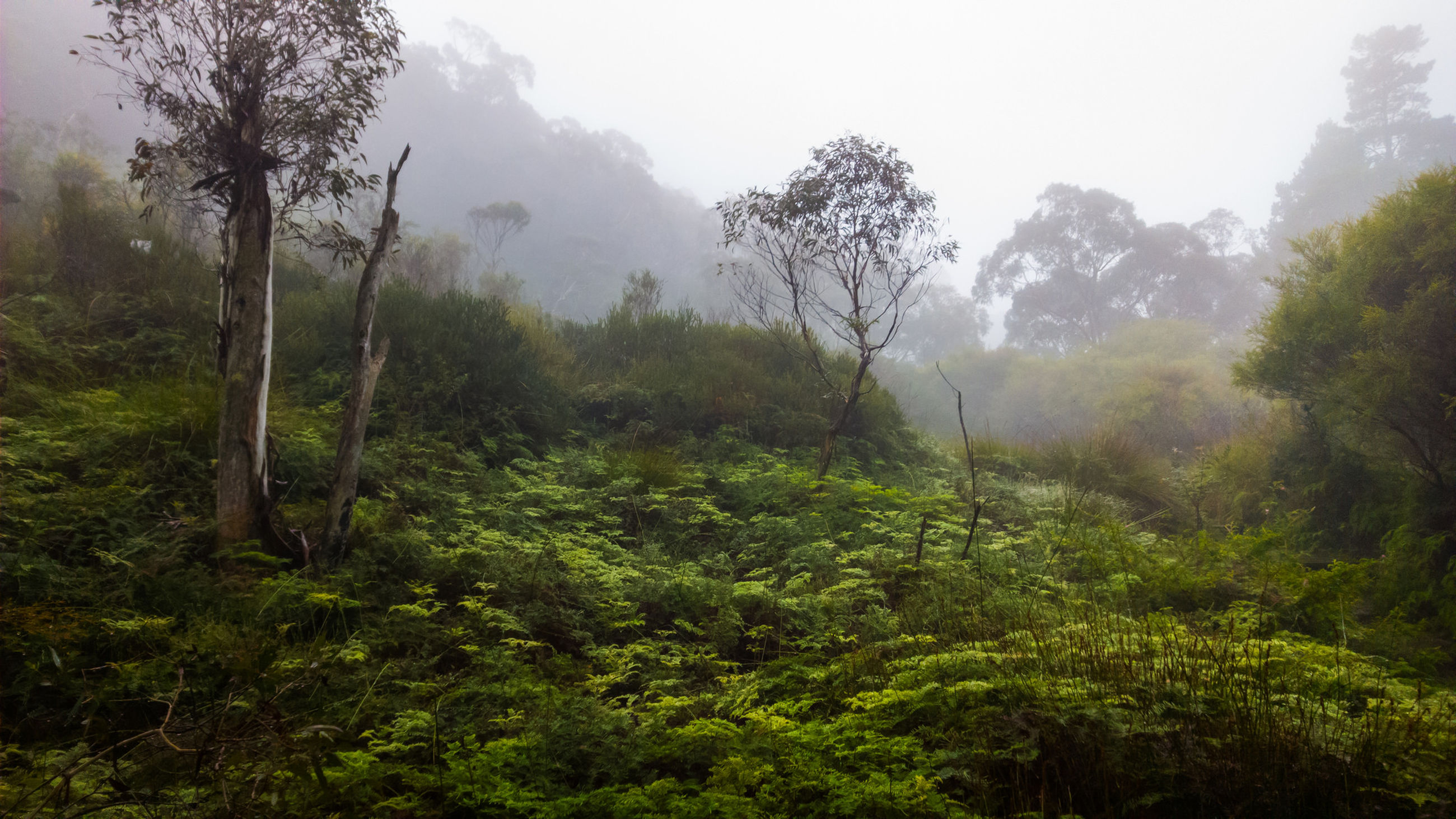 Scenic view of forest against clear sky during foggy weather