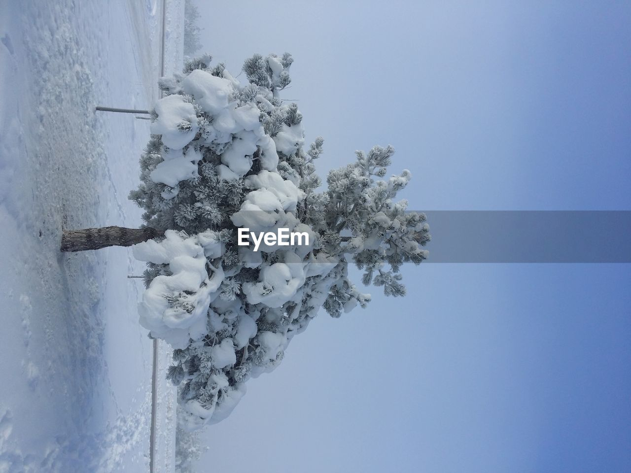 nature, plant, sky, white color, winter, snow, cold temperature, no people, day, tree, copy space, beauty in nature, clear sky, frozen, outdoors, branch, blue, close-up, growth
