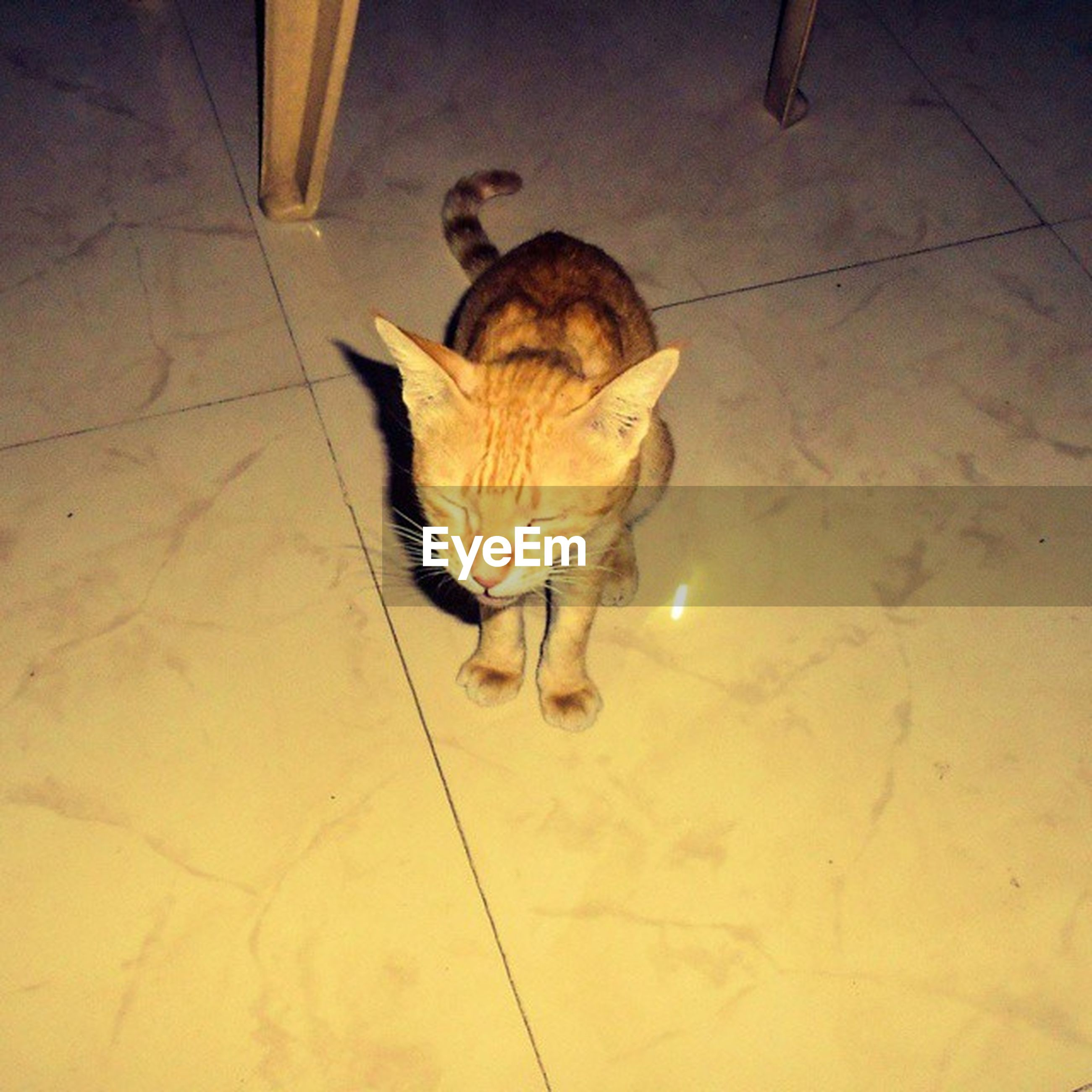 animal themes, one animal, wildlife, indoors, animals in the wild, high angle view, bird, flooring, full length, shadow, tiled floor, zoology, sunlight, no people, domestic animals, floor, two animals, day, dead animal, young animal
