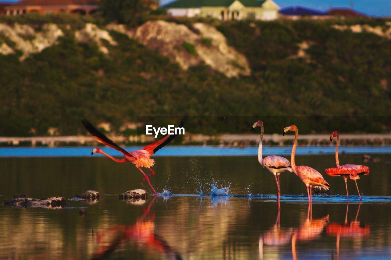 Flamingos In Lake By Mountain