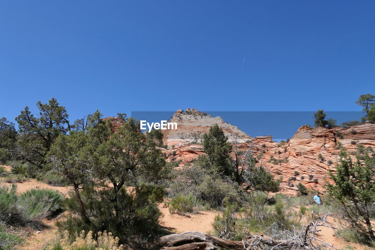 plant, sky, tree, clear sky, blue, scenics - nature, nature, beauty in nature, rock, rock - object, tranquility, landscape, solid, tranquil scene, environment, non-urban scene, rock formation, day, remote, no people, outdoors, climate, arid climate, semi-arid