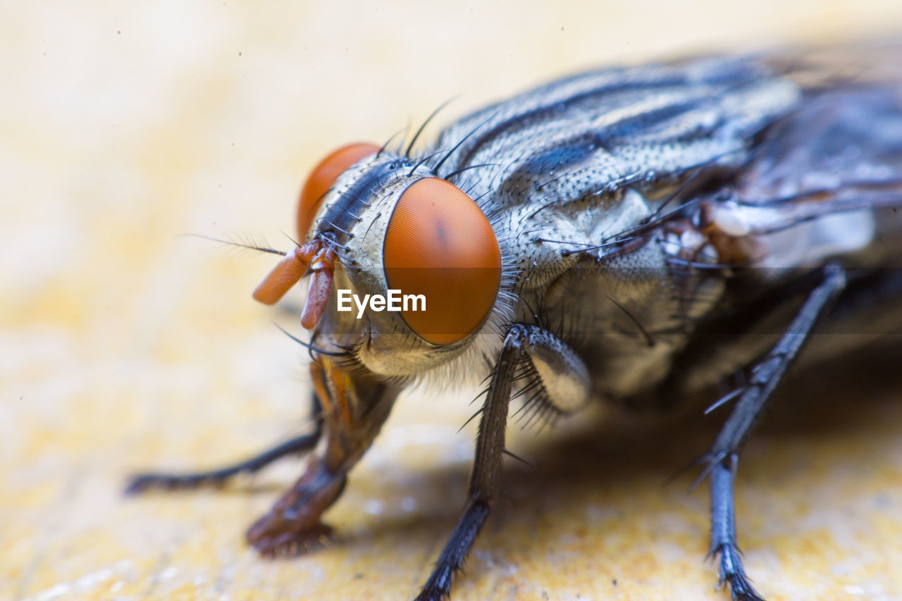 animal themes, animal, invertebrate, animals in the wild, insect, one animal, animal wildlife, close-up, eye, selective focus, animal eye, focus on foreground, animal wing, animal body part, no people, day, fly, macro, outdoors, nature, animal leg, animal head