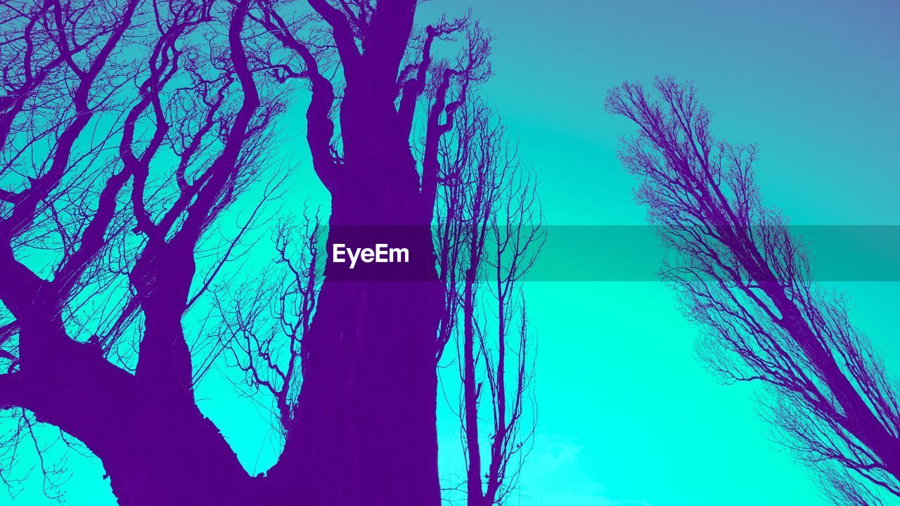 blue, no people, nature, beauty in nature, tranquility, water, tree, low angle view, outdoors, day, sky, close-up