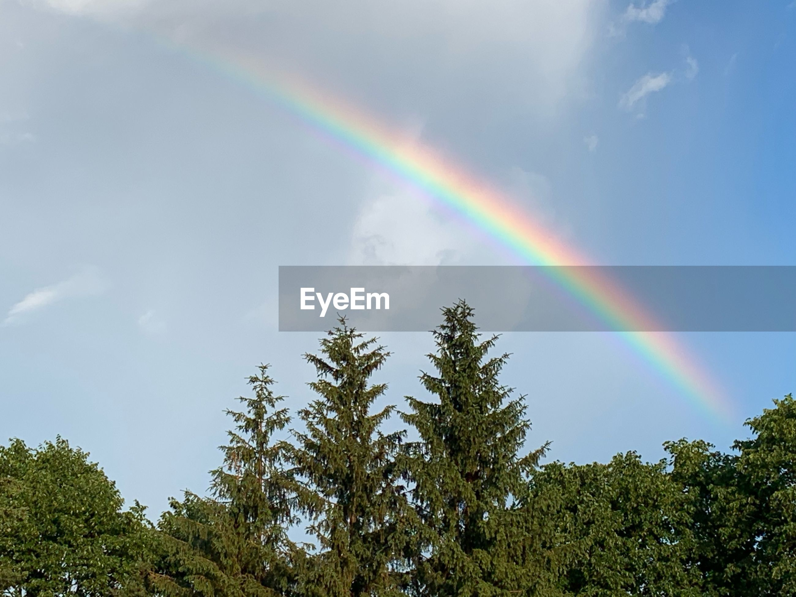 LOW ANGLE VIEW OF RAINBOW OVER TREES AND PLANTS AGAINST SKY