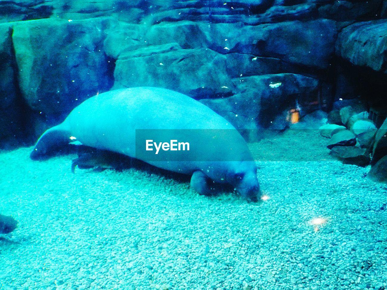 animal themes, animals in the wild, water, sea life, swimming, wildlife, underwater, animal wildlife, nature, no people, undersea, sea, day, aquarium, aquatic mammal, beauty in nature, outdoors, mammal, close-up