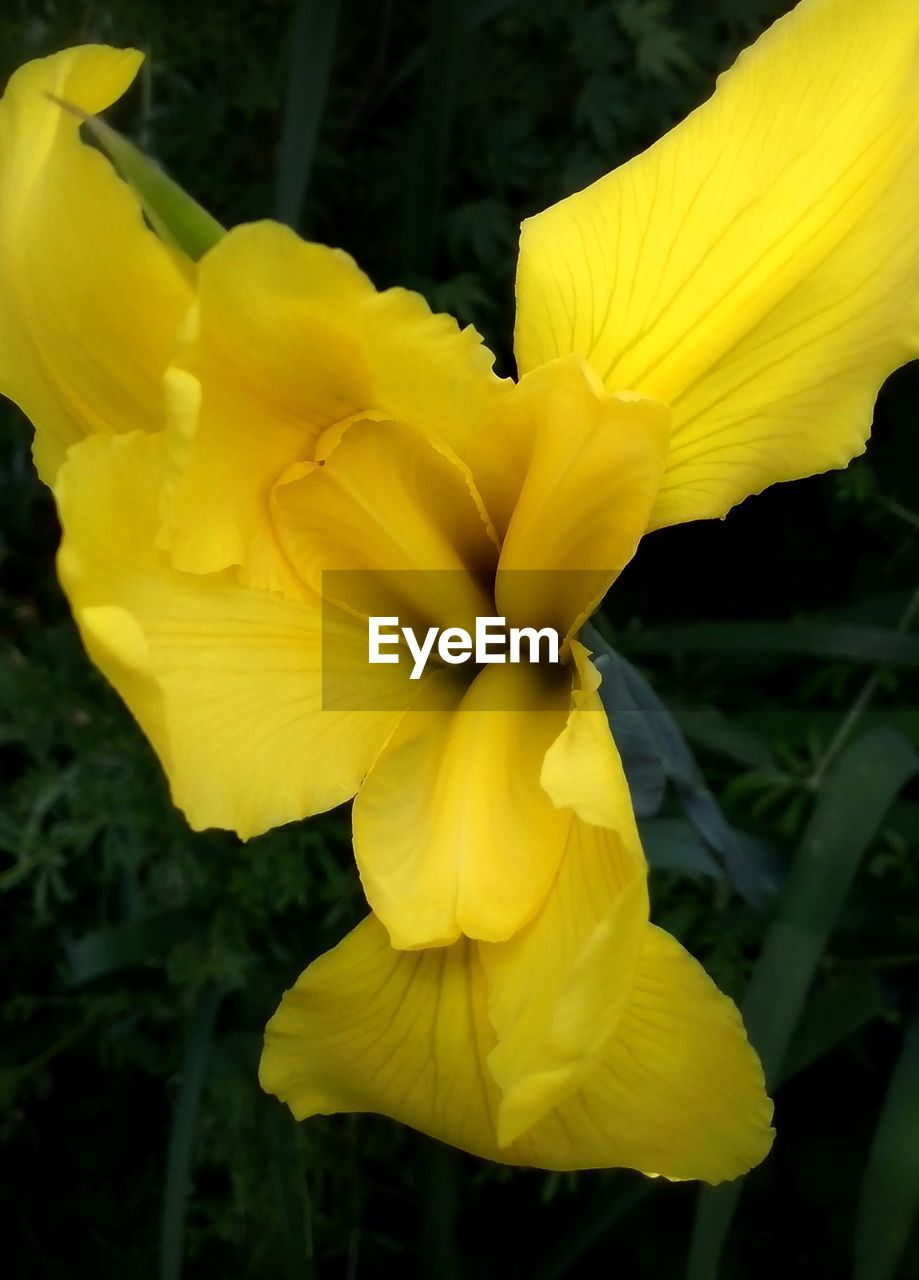 yellow, flower, petal, fragility, flower head, beauty in nature, growth, nature, freshness, vibrant color, outdoors, blossom, plant, no people, close-up, springtime, day, stamen, day lily, blooming, soft focus