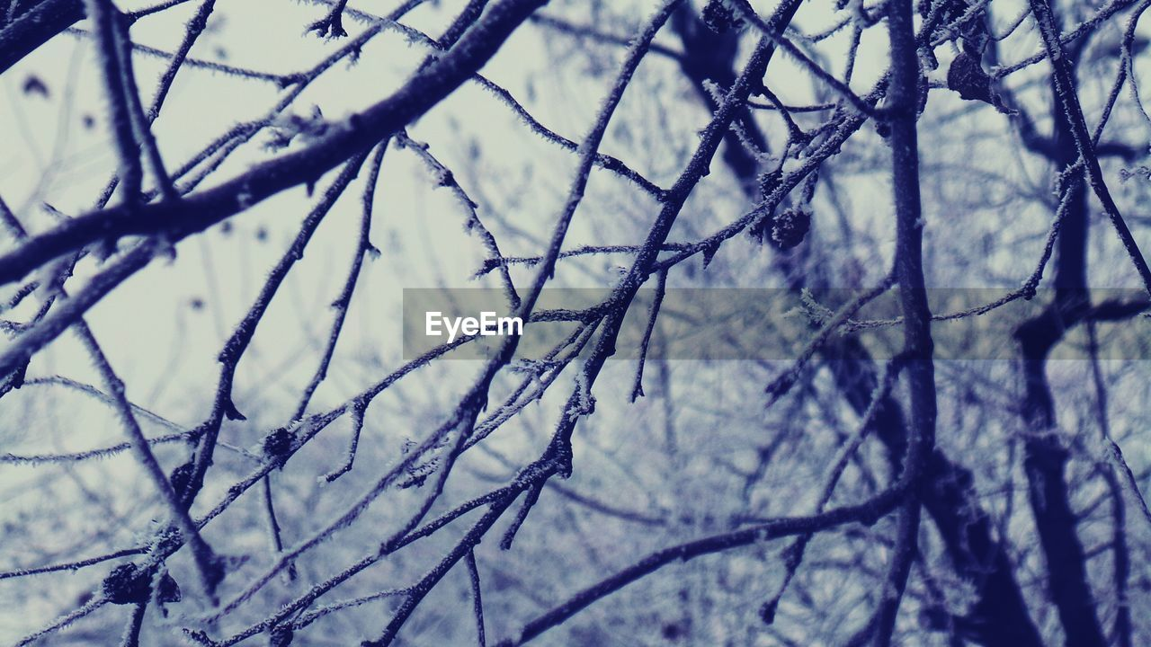 nature, branch, bare tree, day, no people, winter, cold temperature, outdoors, focus on foreground, tree, close-up, beauty in nature, snow