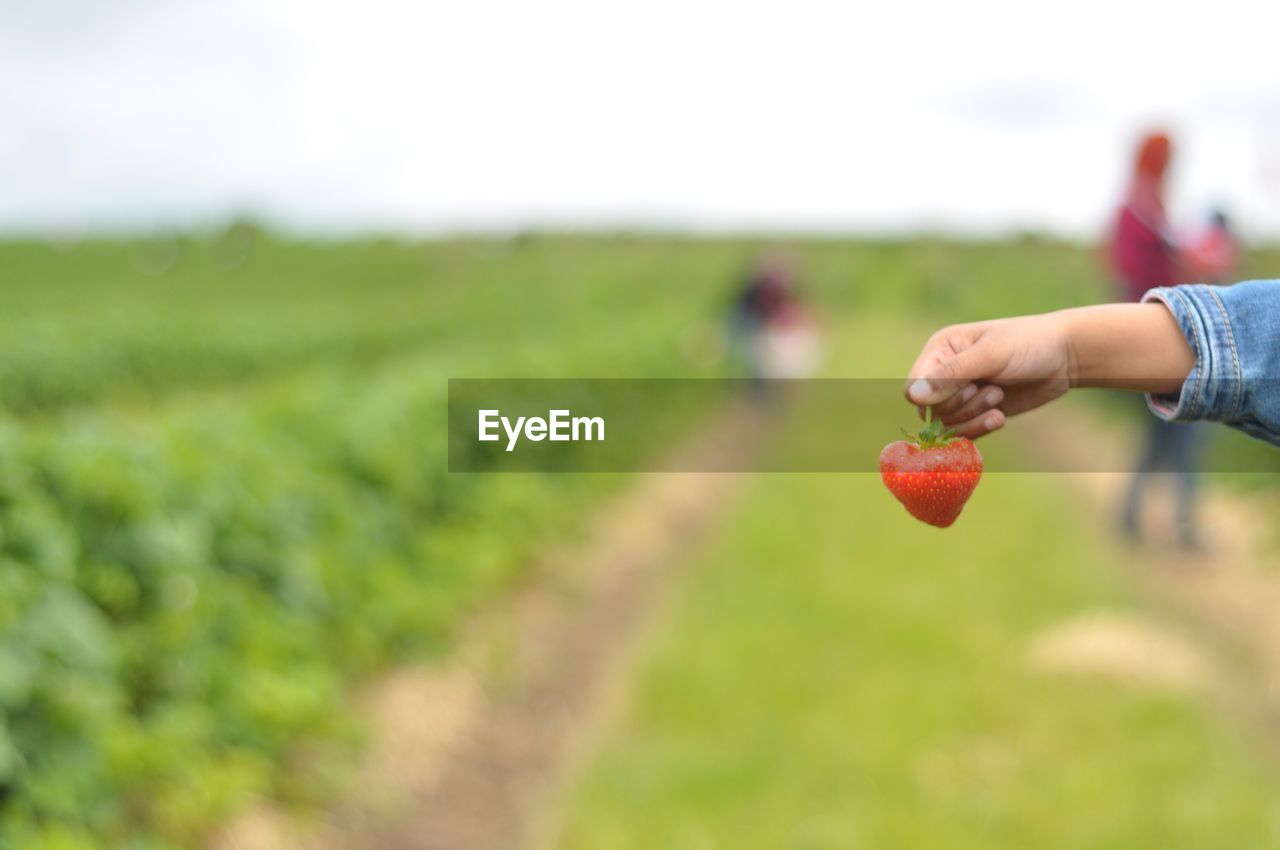 fruit, human hand, field, food and drink, agriculture, real people, human body part, food, red, healthy eating, growth, focus on foreground, crop, outdoors, freshness, one person, nature, day, apple - fruit, women, lifestyles, men, close-up, beauty in nature, sky, people