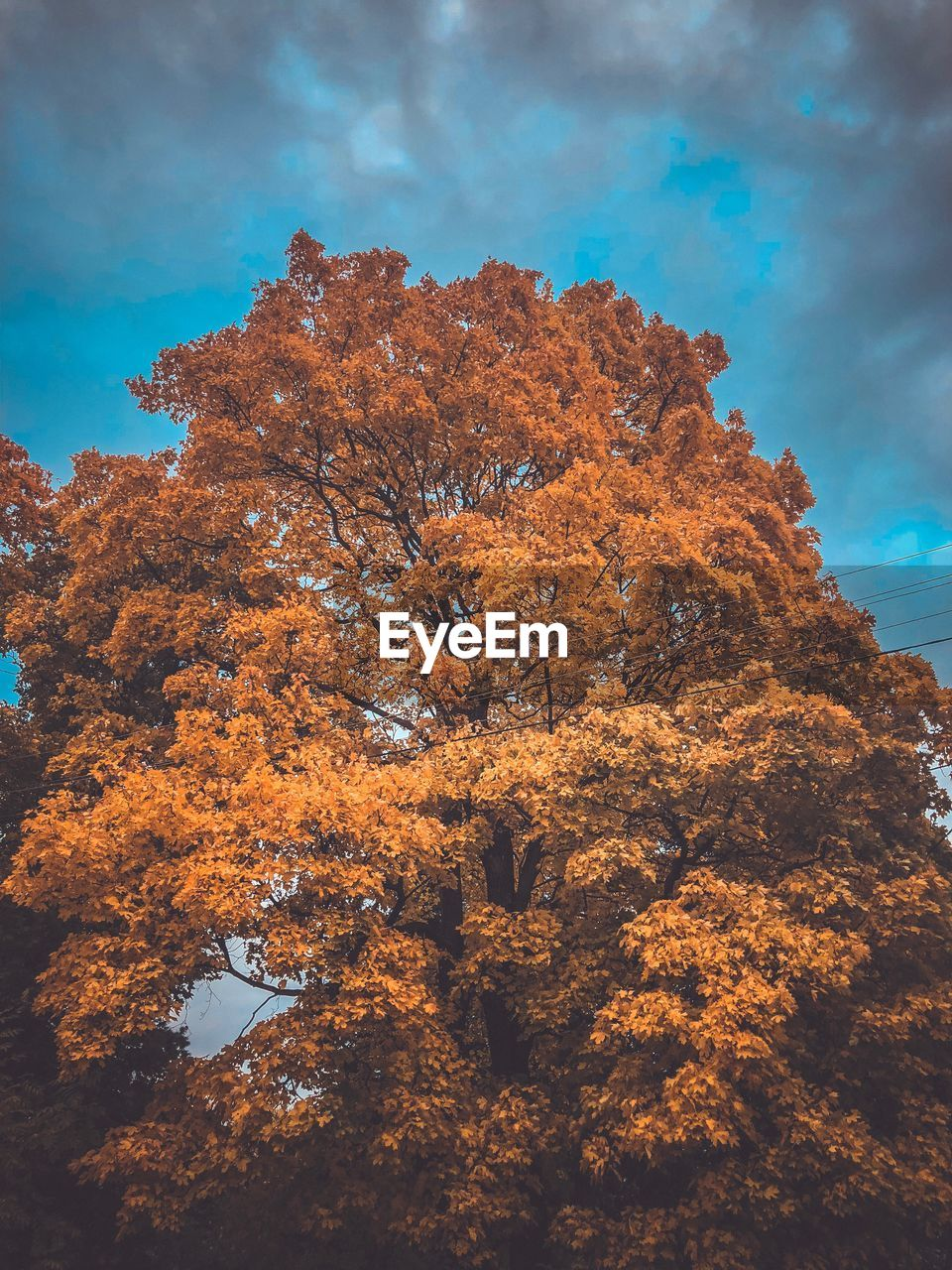 tree, autumn, sky, plant, change, cloud - sky, nature, beauty in nature, low angle view, growth, no people, day, outdoors, orange color, tranquility, branch, scenics - nature, sunlight, tranquil scene, fall