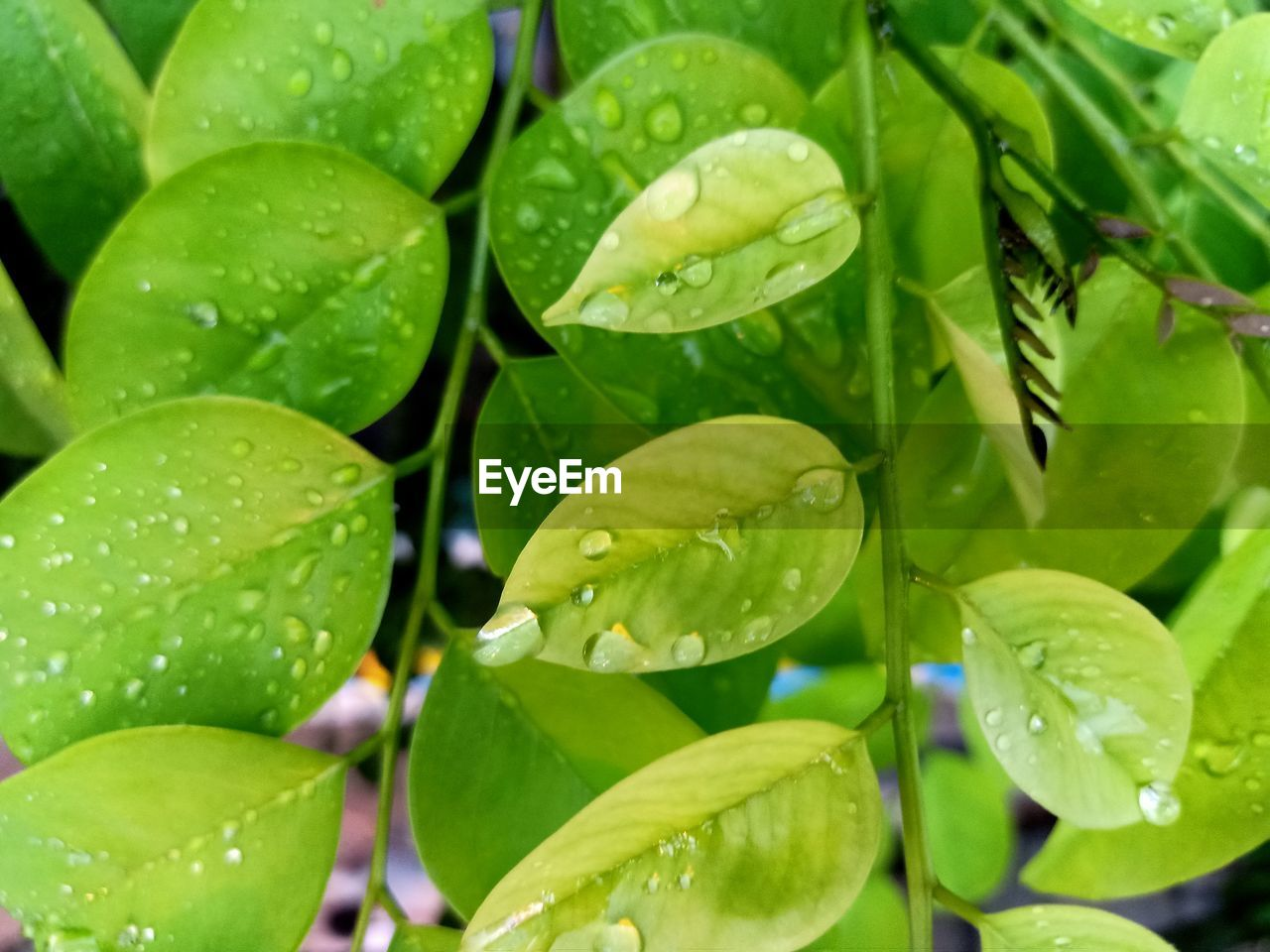 green color, leaf, plant part, growth, water, plant, close-up, drop, wet, beauty in nature, no people, day, full frame, nature, freshness, selective focus, outdoors, focus on foreground, leaves, rain, raindrop, purity, dew