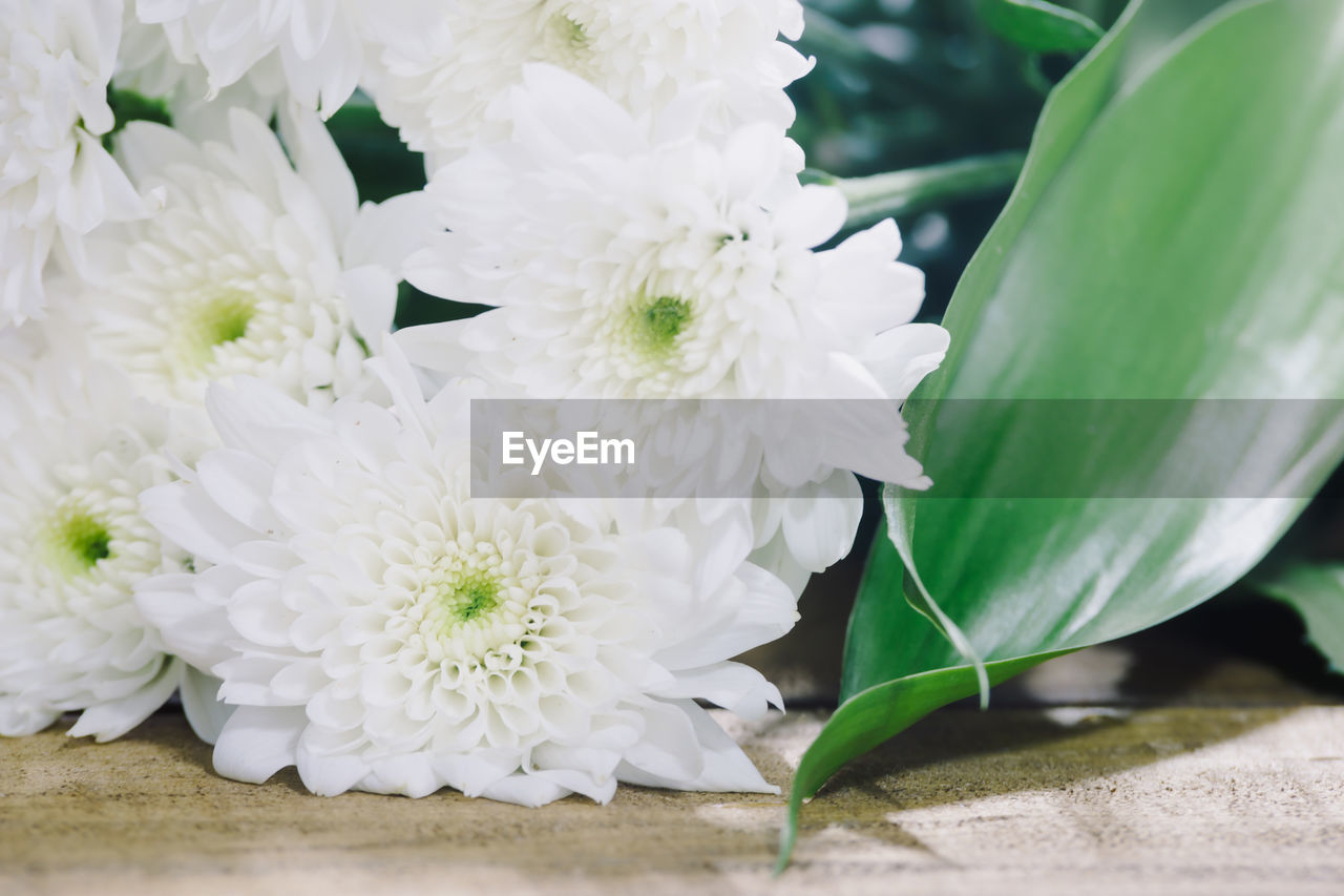 flowering plant, flower, plant, freshness, fragility, vulnerability, beauty in nature, close-up, white color, flower head, petal, inflorescence, nature, growth, no people, day, leaf, plant part, outdoors, botany, flower arrangement