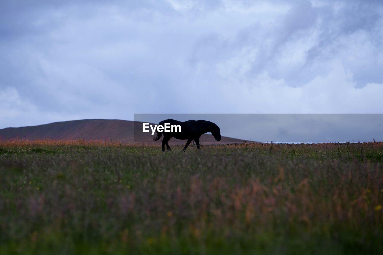 Horse Walking On Landscape Against Sky