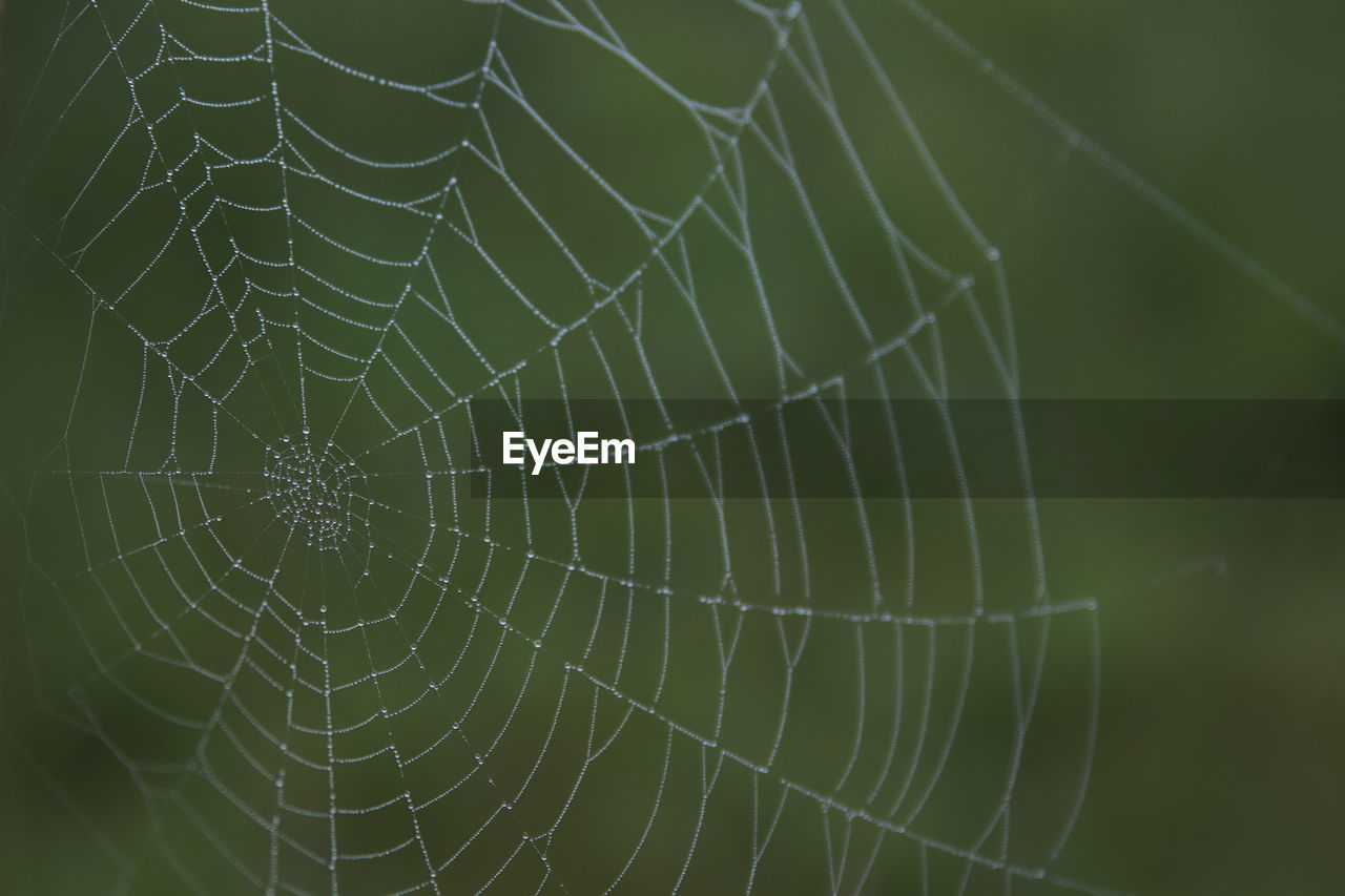 CLOSE-UP OF SPIDER WEB IN A GREEN BACKGROUND