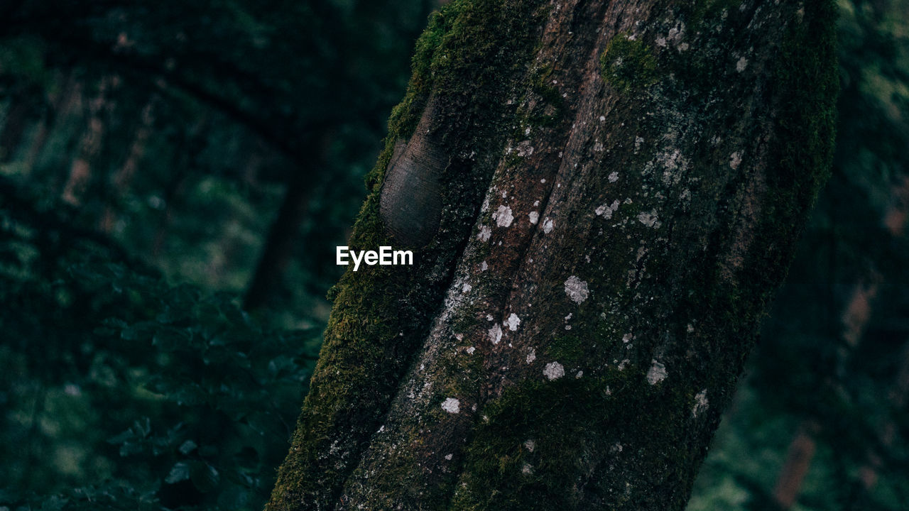 tree trunk, tree, focus on foreground, close-up, moss, nature, wood - material, textured, no people, day, deforestation, forest, one animal, tree stump, outdoors, animal themes
