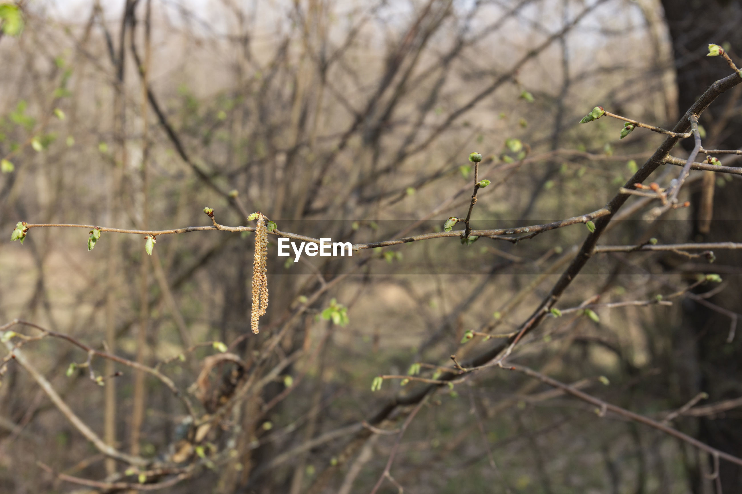 CLOSE-UP OF BARE TREE BRANCH