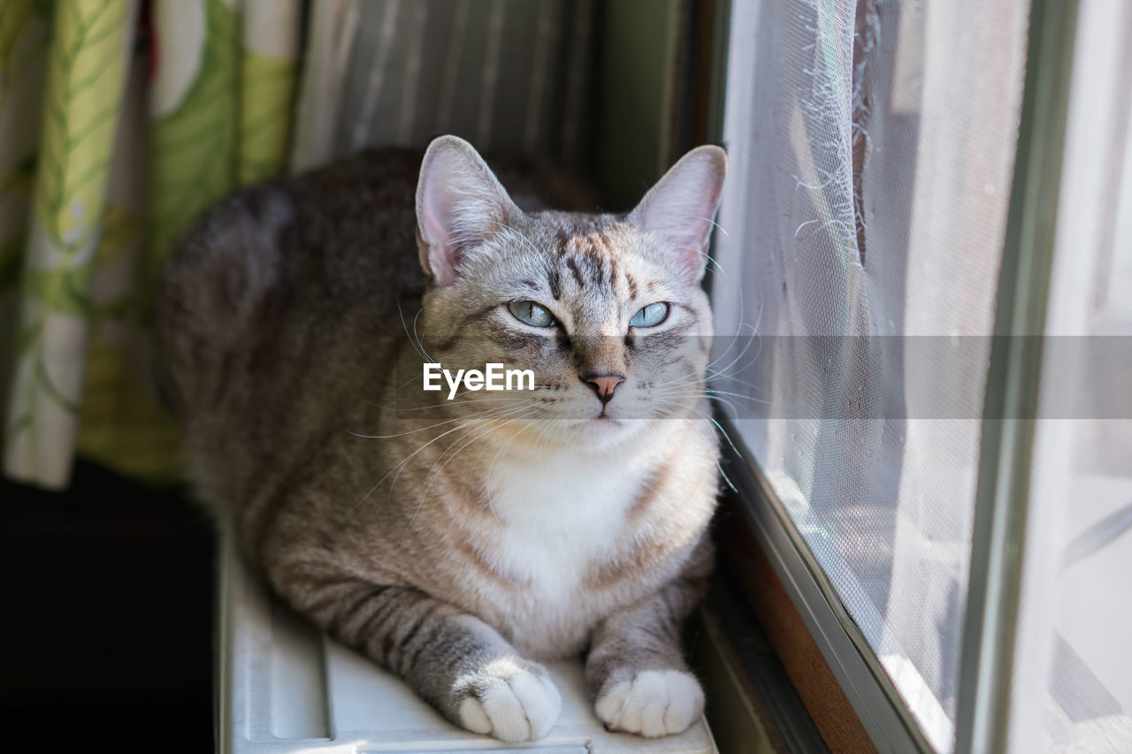 cat, pets, domestic, feline, domestic cat, domestic animals, animal themes, mammal, animal, one animal, vertebrate, sitting, window, no people, whisker, indoors, portrait, looking at camera, looking, focus on foreground, tabby, animal eye