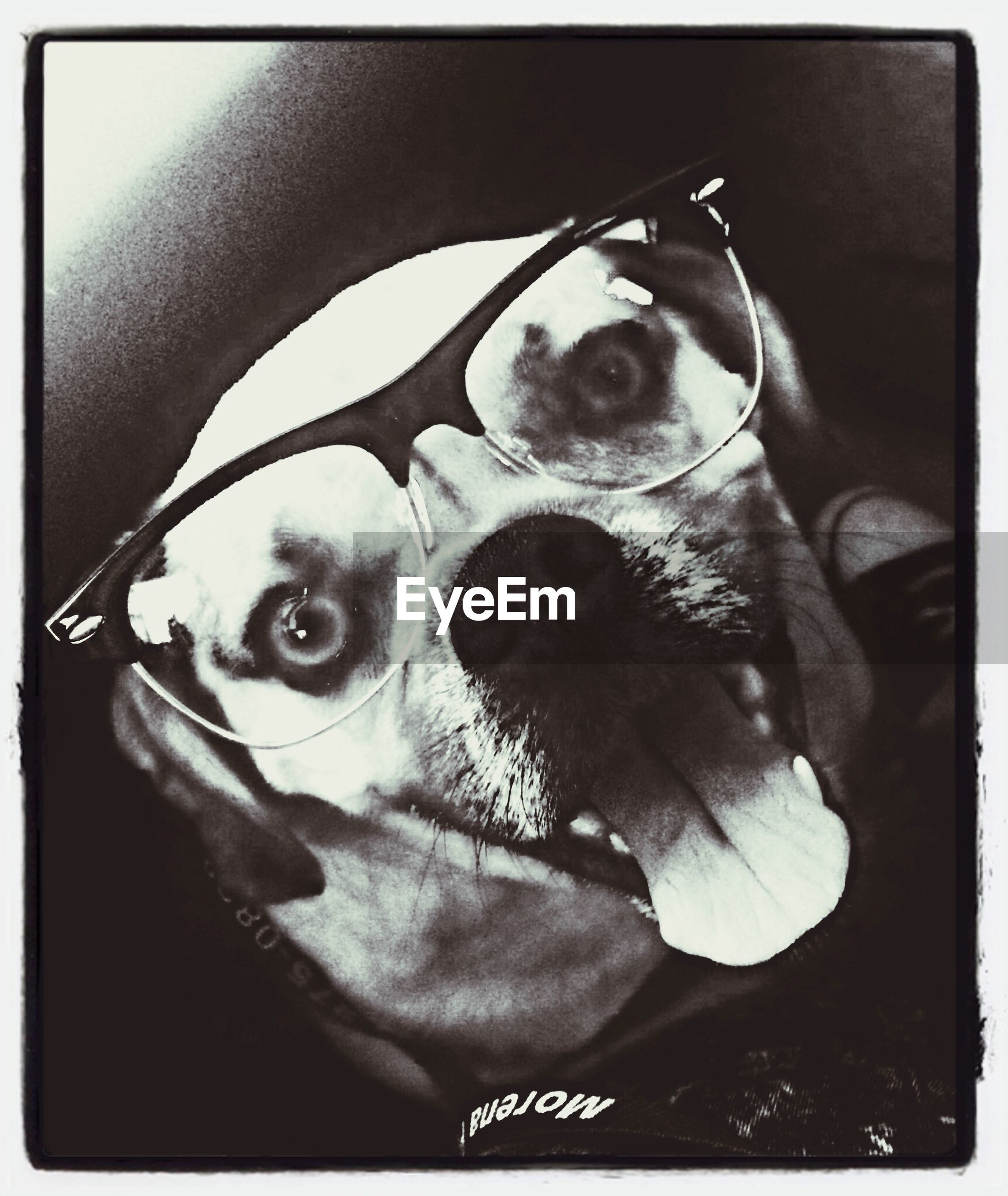 transfer print, portrait, one animal, pets, auto post production filter, looking at camera, domestic animals, animal themes, mammal, dog, front view, animal head, indoors, close-up, sitting, staring, humor, day, animal body part