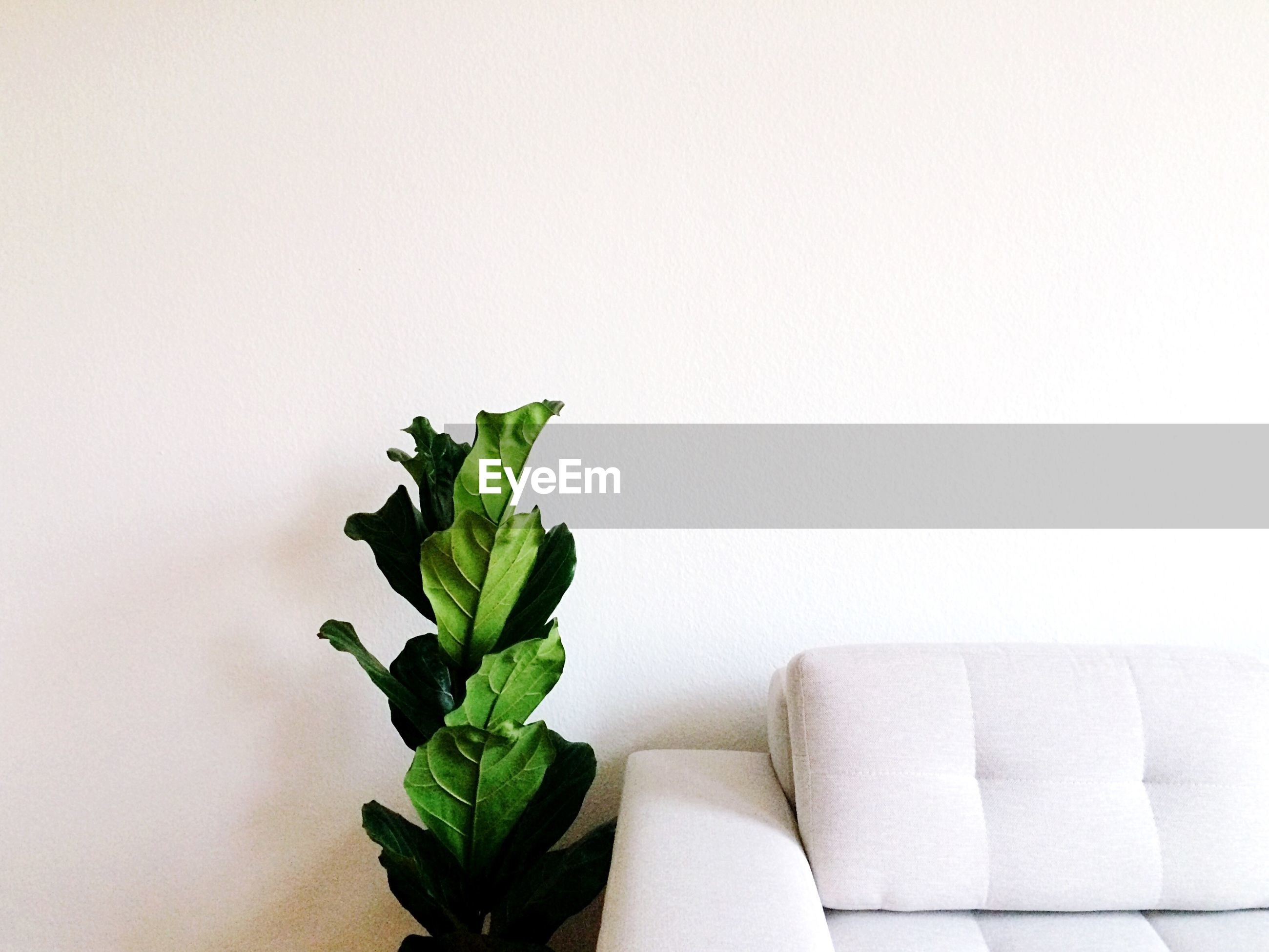 Houseplant by sofa against white wall at home