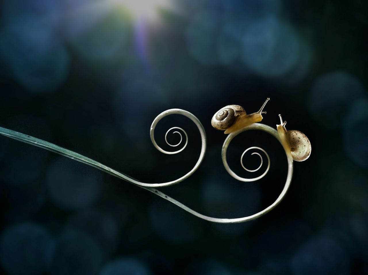Close-up of snails on tendrils