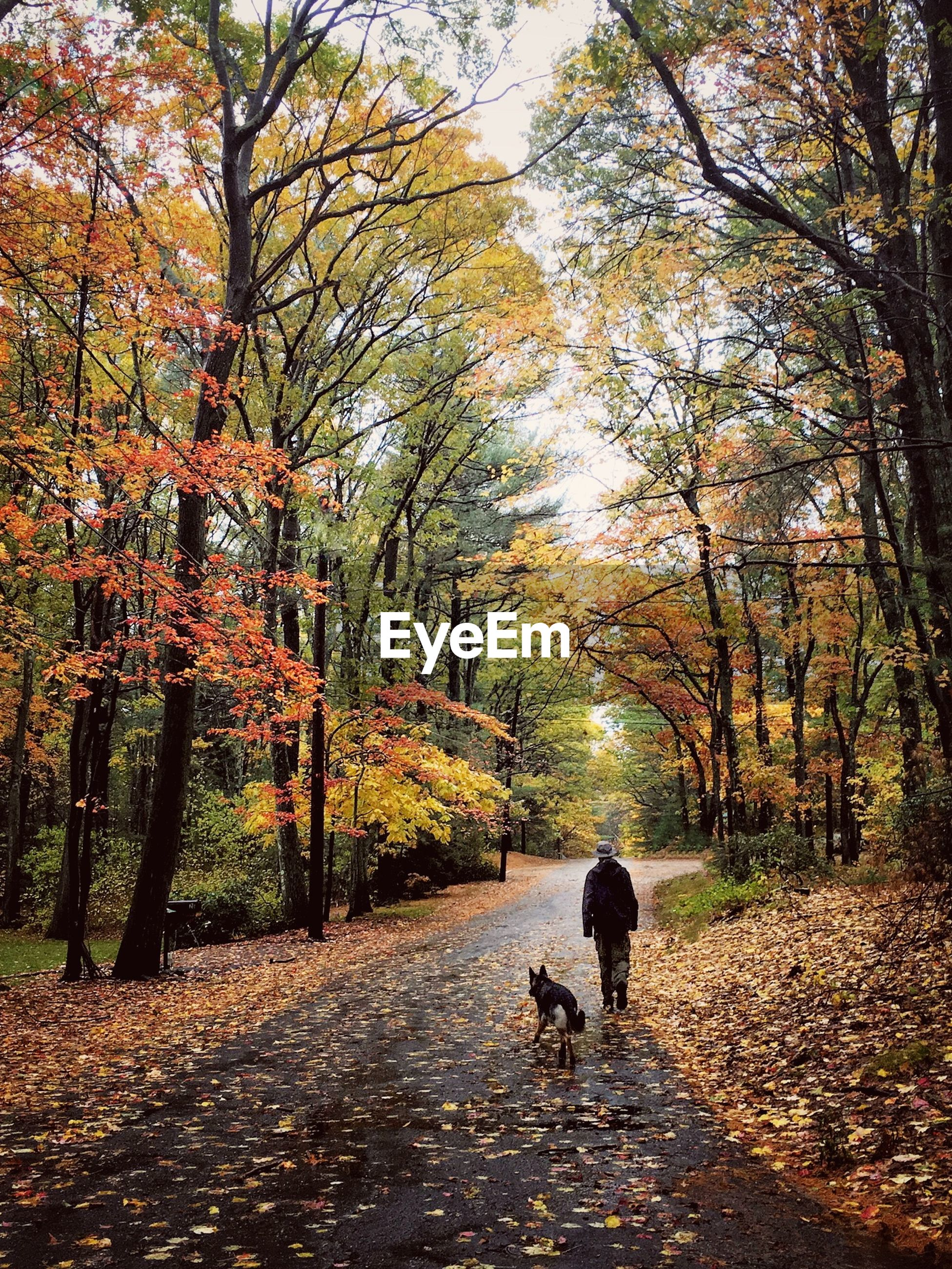 Man and dog walking amidst trees during autumn
