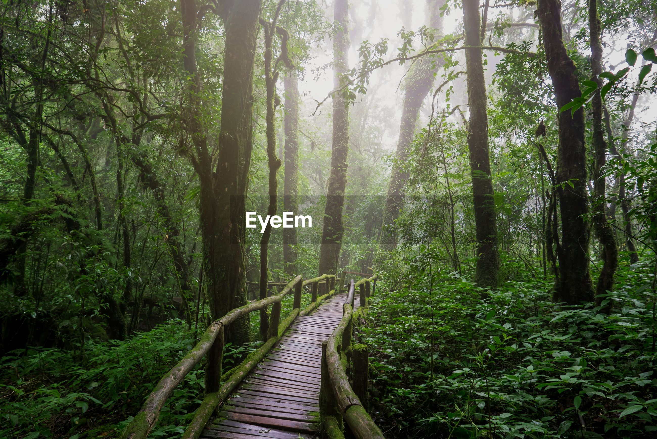 Natural rainforest study path.