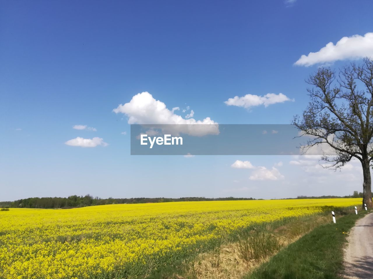 sky, plant, landscape, beauty in nature, field, yellow, tranquil scene, tranquility, land, rural scene, scenics - nature, environment, oilseed rape, flower, nature, growth, cloud - sky, agriculture, no people, flowering plant, outdoors, springtime