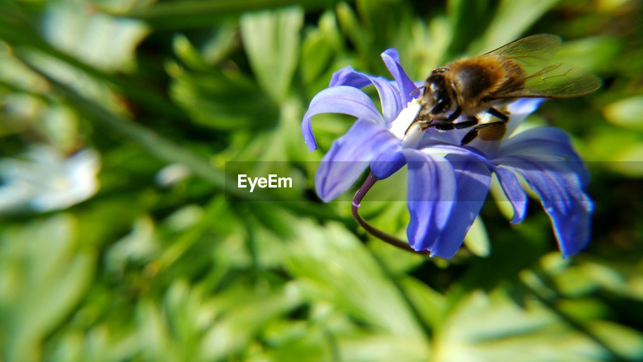 flower, nature, one animal, beauty in nature, petal, animal themes, fragility, animals in the wild, growth, insect, purple, bee, no people, freshness, outdoors, day, plant, pollination, animal wildlife, close-up, flower head, buzzing, blooming, bumblebee