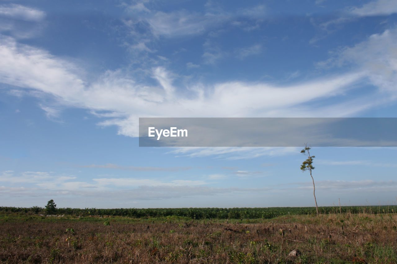cloud - sky, sky, field, landscape, land, environment, beauty in nature, plant, tranquility, tranquil scene, scenics - nature, nature, growth, no people, day, non-urban scene, rural scene, agriculture, outdoors, idyllic, plantation