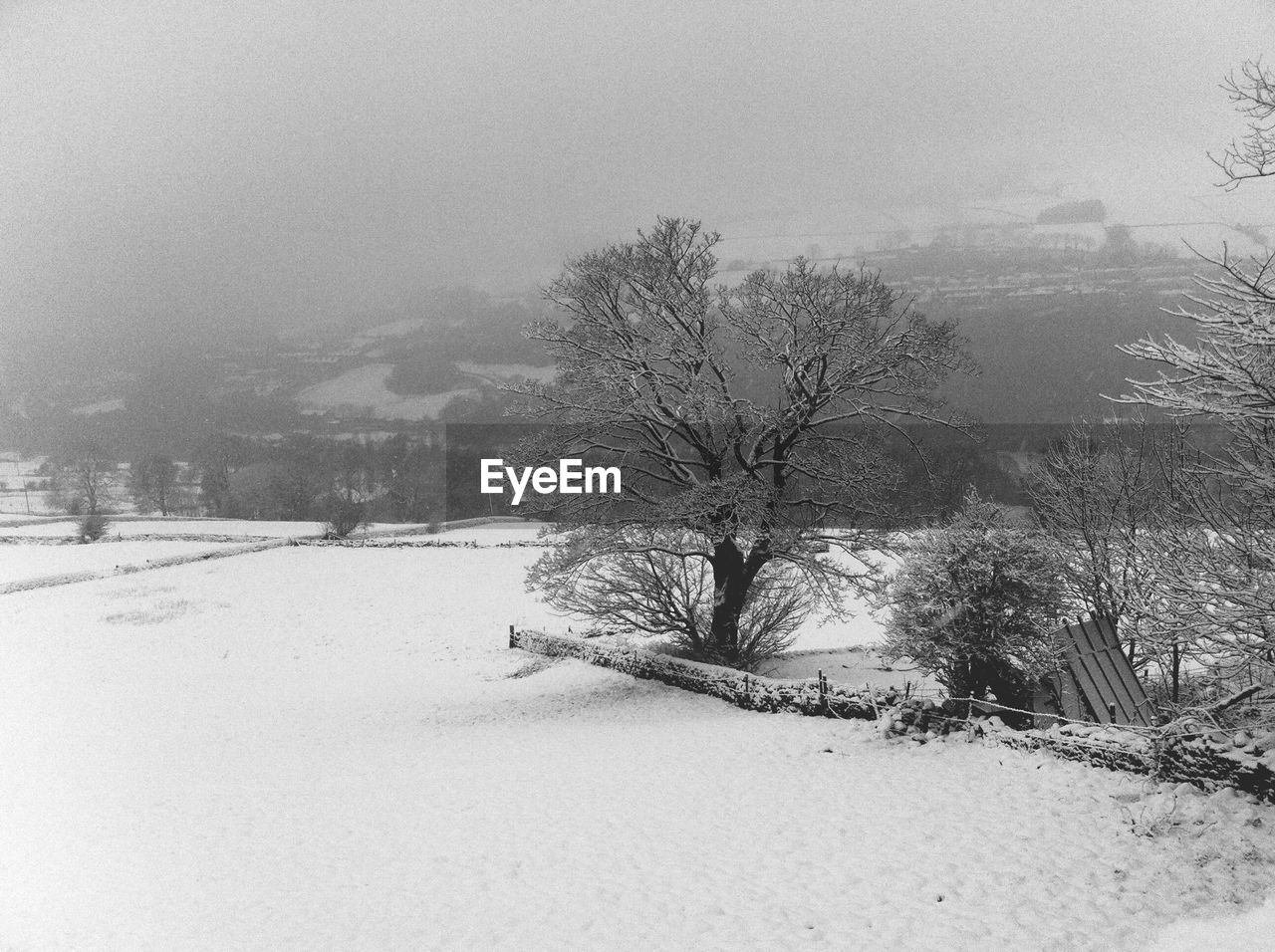 Trees on snow covered field against sky during foggy weather