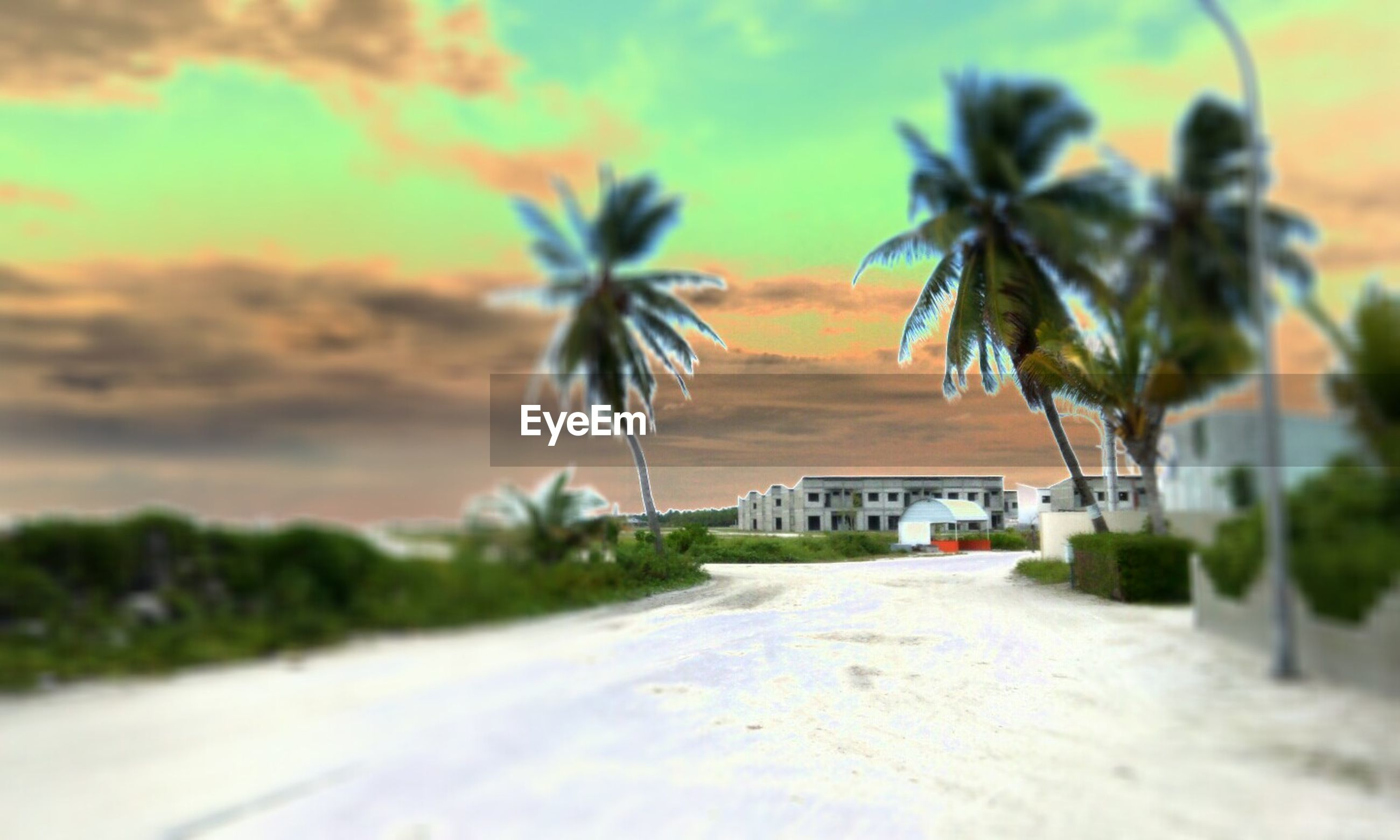 palm tree, tree, sky, road, transportation, the way forward, sunset, street, building exterior, cloud - sky, growth, built structure, car, architecture, cloud, nature, outdoors, beauty in nature, no people, house