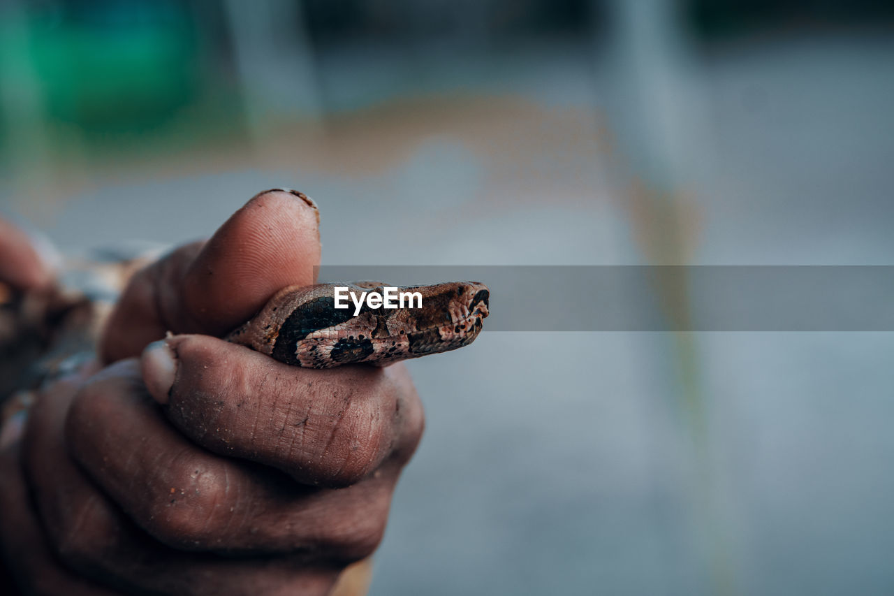 human hand, hand, holding, one person, real people, human body part, focus on foreground, close-up, finger, human finger, day, lifestyles, body part, selective focus, unrecognizable person, outdoors, personal perspective, leisure activity, men, human limb