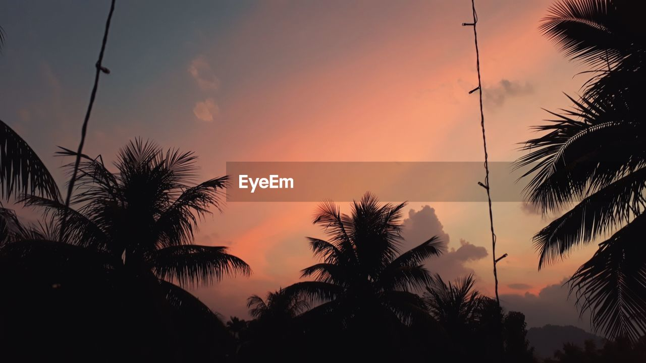 sunset, silhouette, sky, beauty in nature, palm tree, tree, orange color, plant, tranquility, tranquil scene, scenics - nature, tropical climate, no people, nature, growth, cloud - sky, outdoors, non-urban scene, idyllic, low angle view, coconut palm tree, palm leaf, romantic sky
