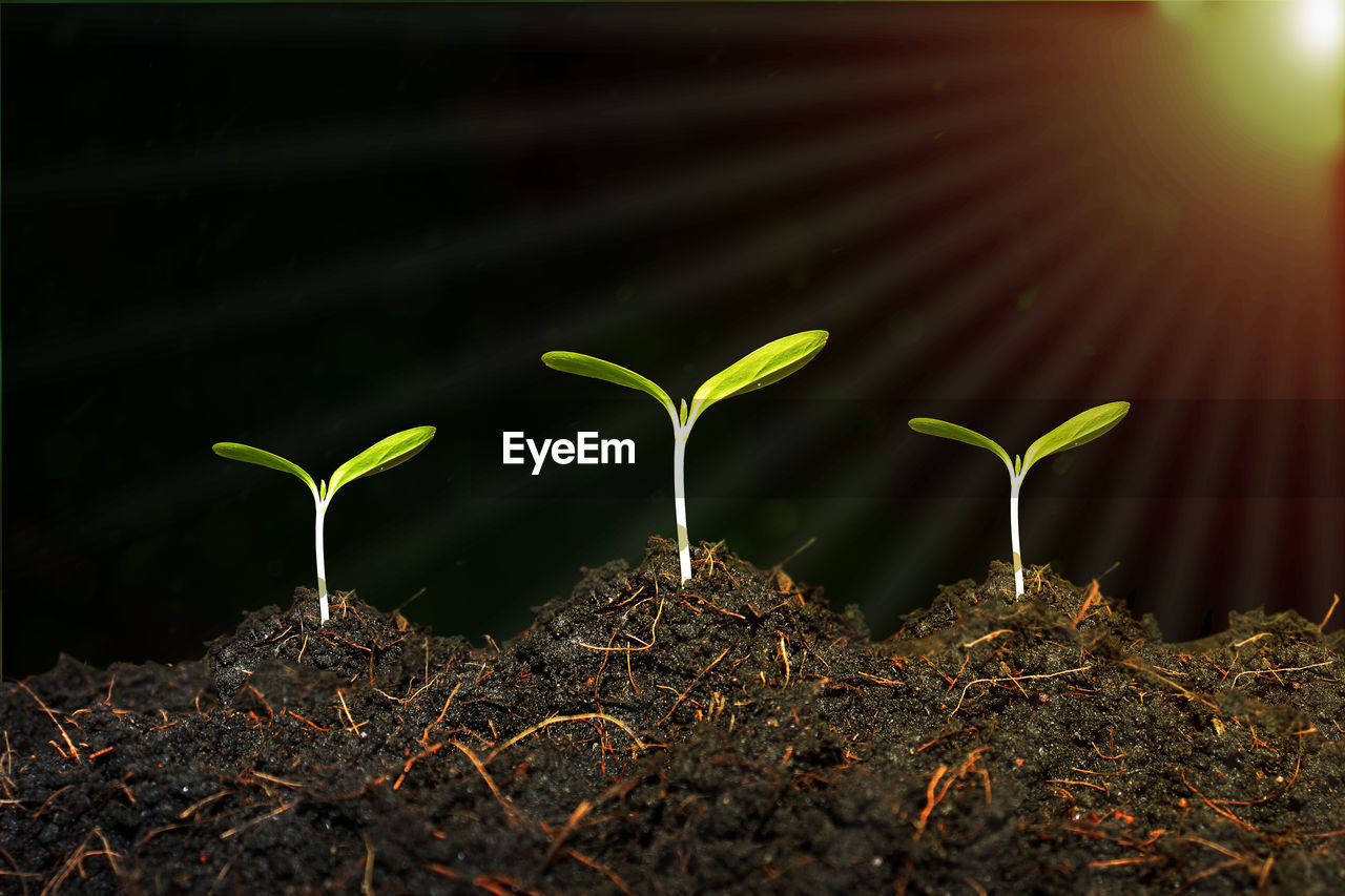 growth, plant, nature, seedling, no people, close-up, beauty in nature, selective focus, plant part, beginnings, leaf, fragility, sunlight, vulnerability, green color, outdoors, day, land, dirt, field, gardening, plantation