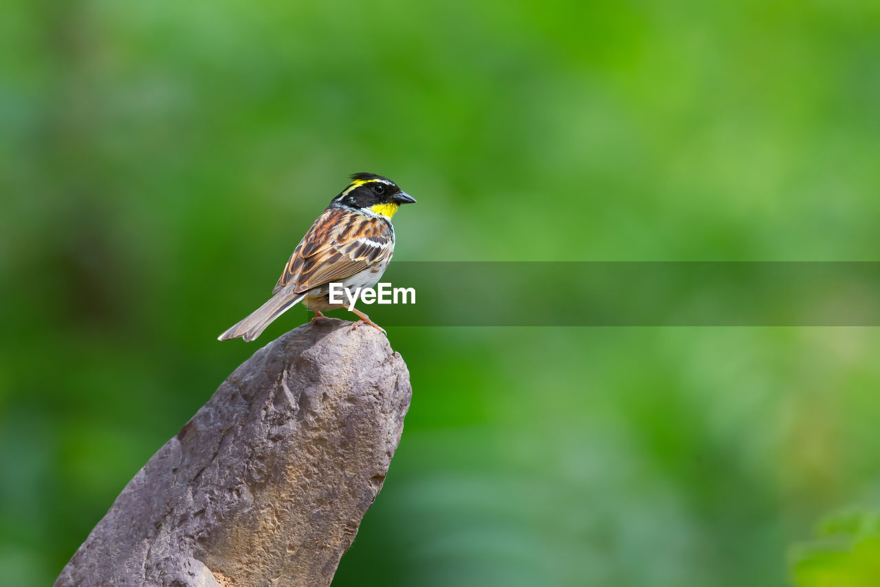 one animal, animals in the wild, animal themes, perching, animal wildlife, bird, focus on foreground, nature, no people, day, close-up, kingfisher, outdoors, beauty in nature