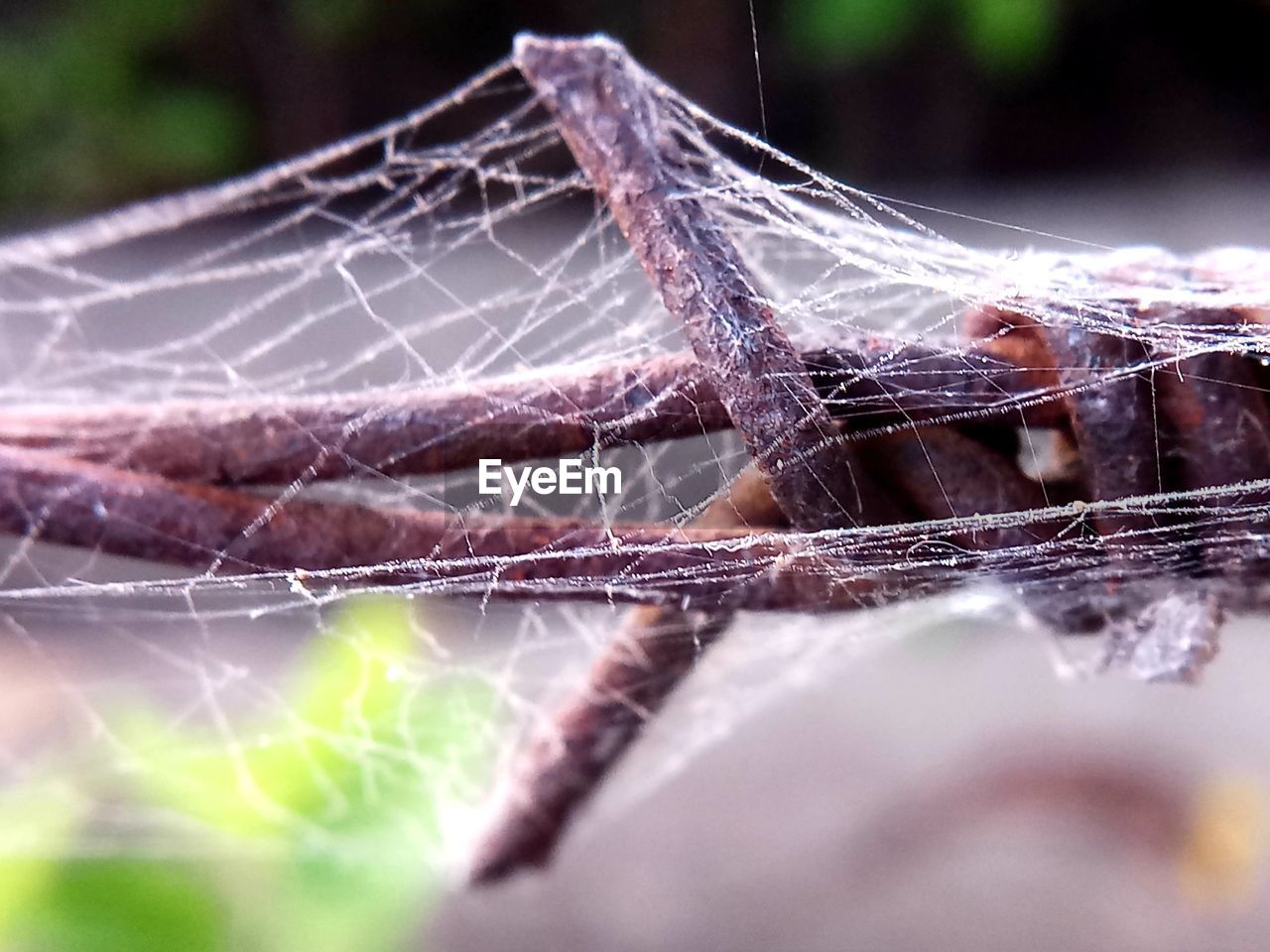 spider web, fragility, close-up, vulnerability, invertebrate, selective focus, animal themes, animal, no people, insect, nature, one animal, animals in the wild, arachnid, focus on foreground, animal wildlife, day, spider, arthropod, outdoors, complexity, web