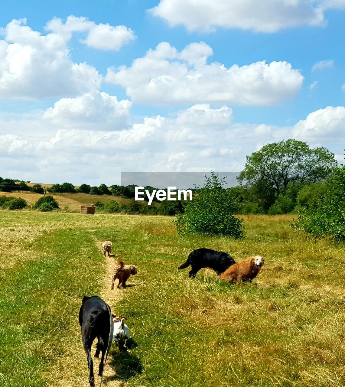 mammal, animal themes, animal, plant, domestic, domestic animals, field, sky, grass, group of animals, pets, land, cloud - sky, vertebrate, livestock, tree, nature, day, cattle, landscape, no people, herbivorous, outdoors