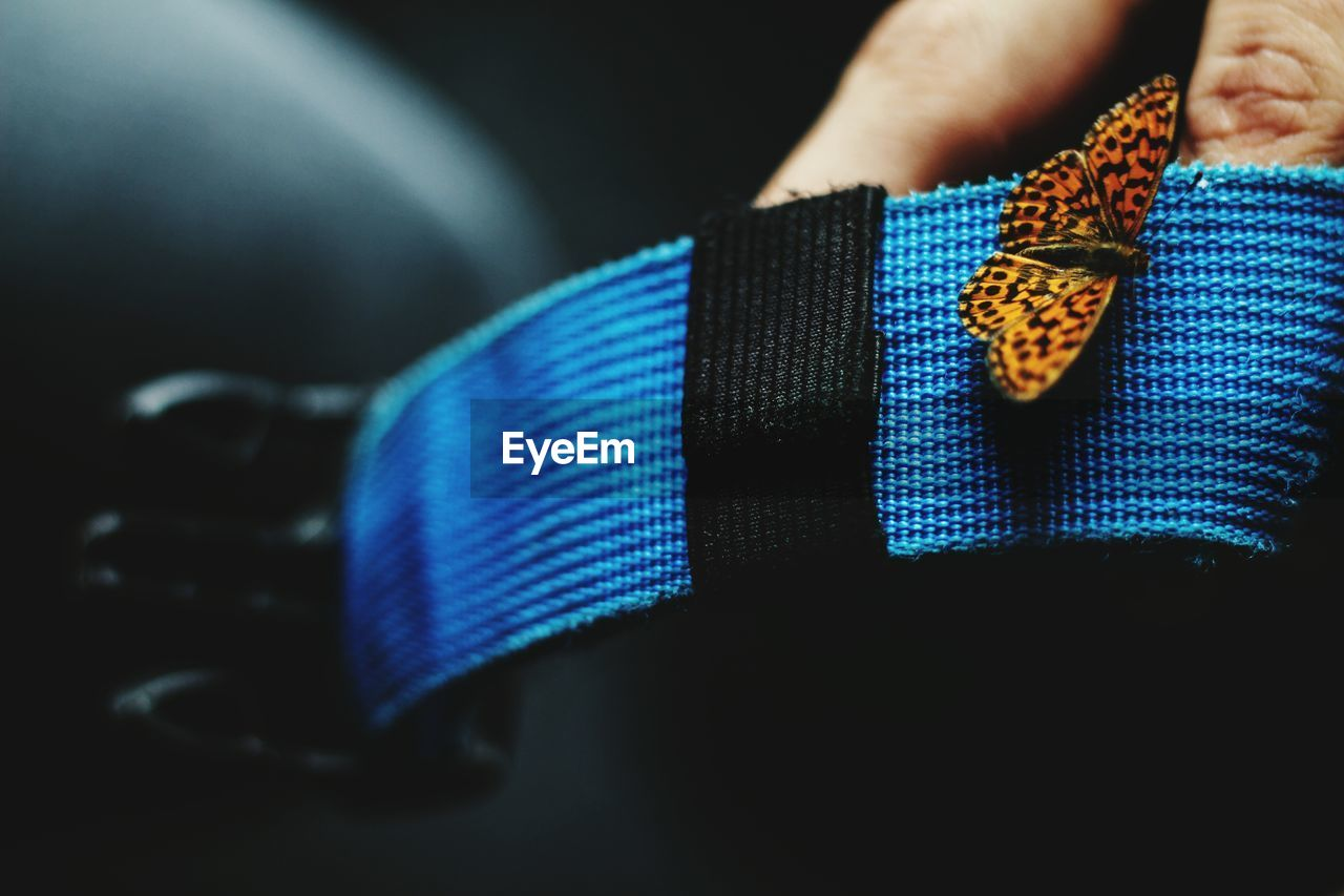 Close-Up Of Butterfly On Blue Belt