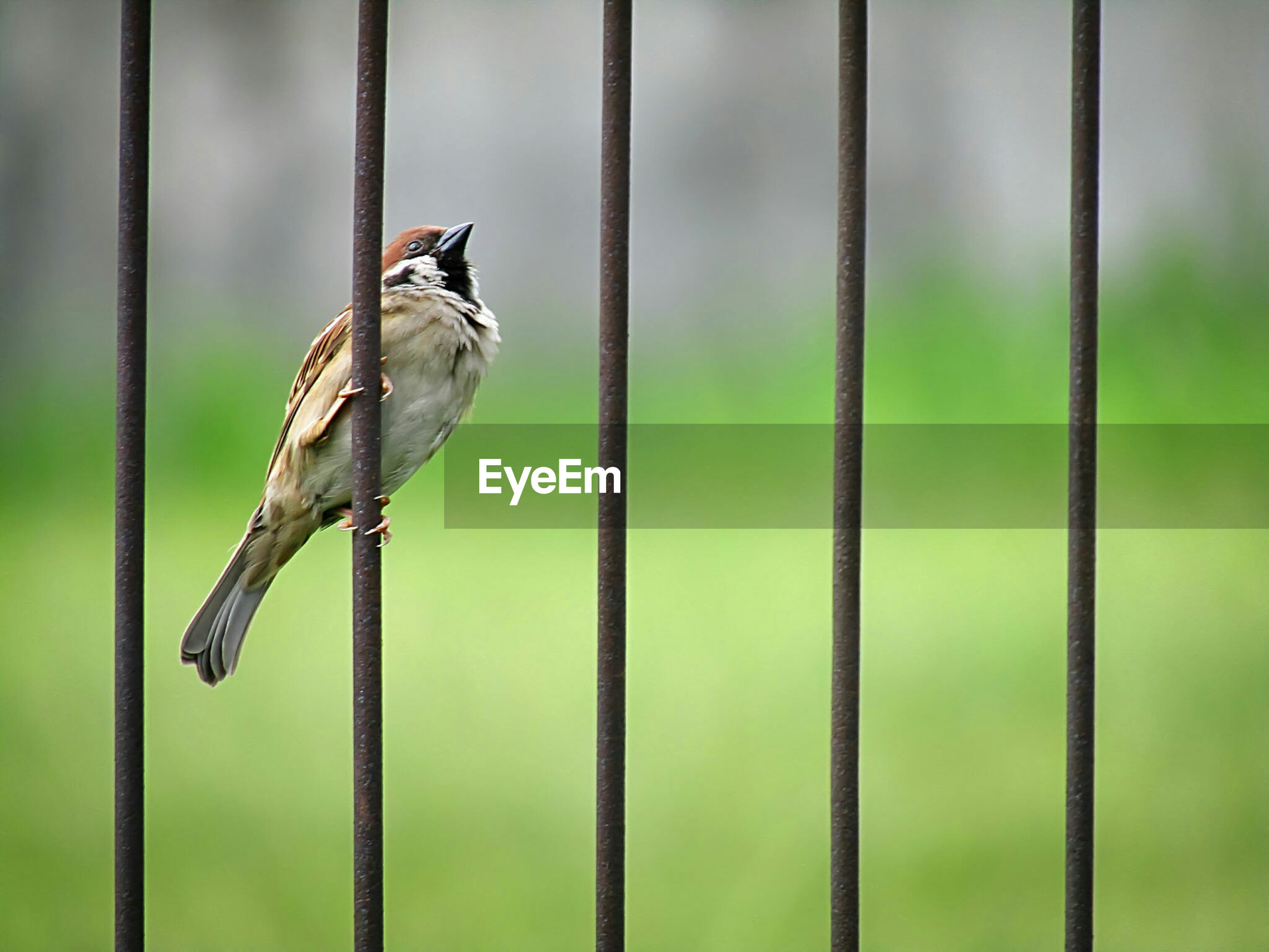 Low angle view of sparrow on railing