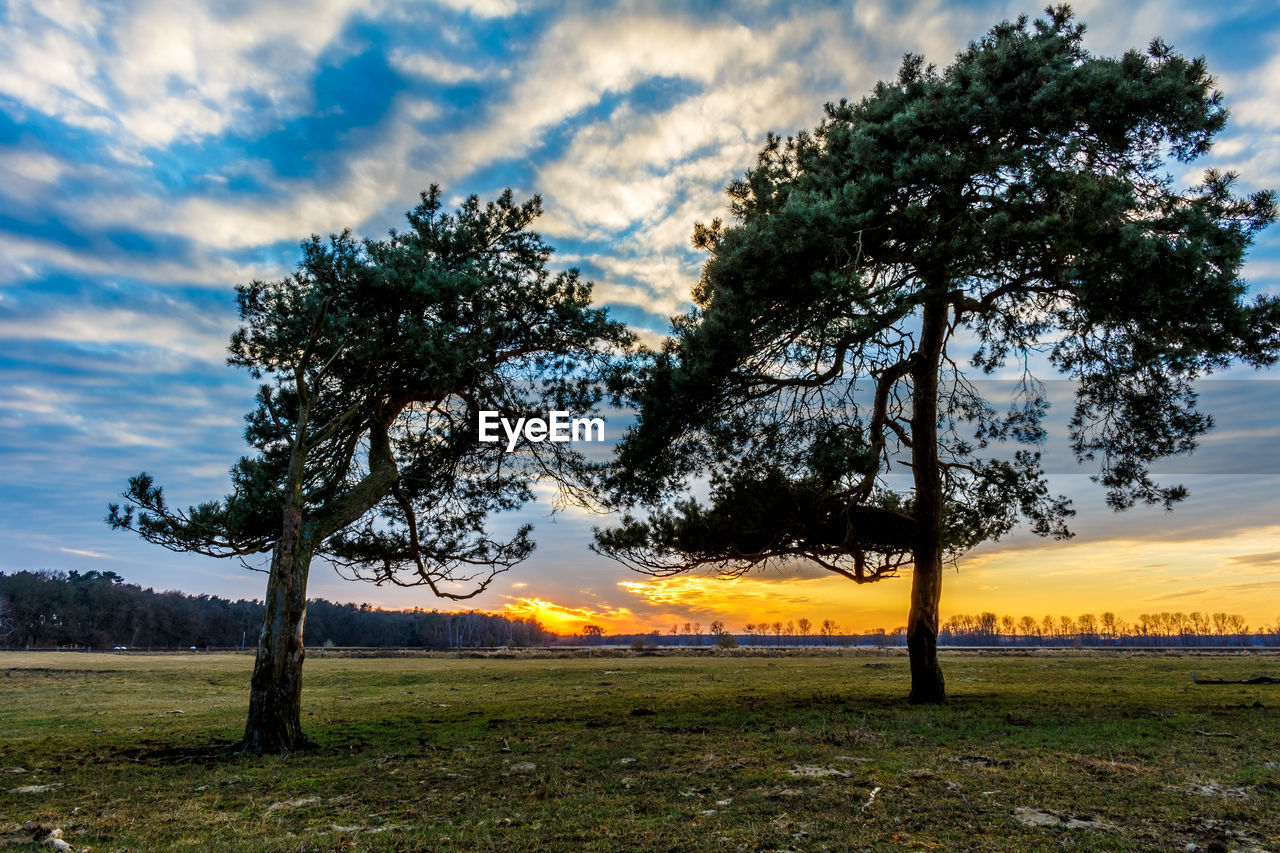 tree, nature, tranquil scene, scenics, beauty in nature, tranquility, sky, cloud - sky, landscape, field, sunset, outdoors, growth, idyllic, tree trunk, no people, branch, grass, day
