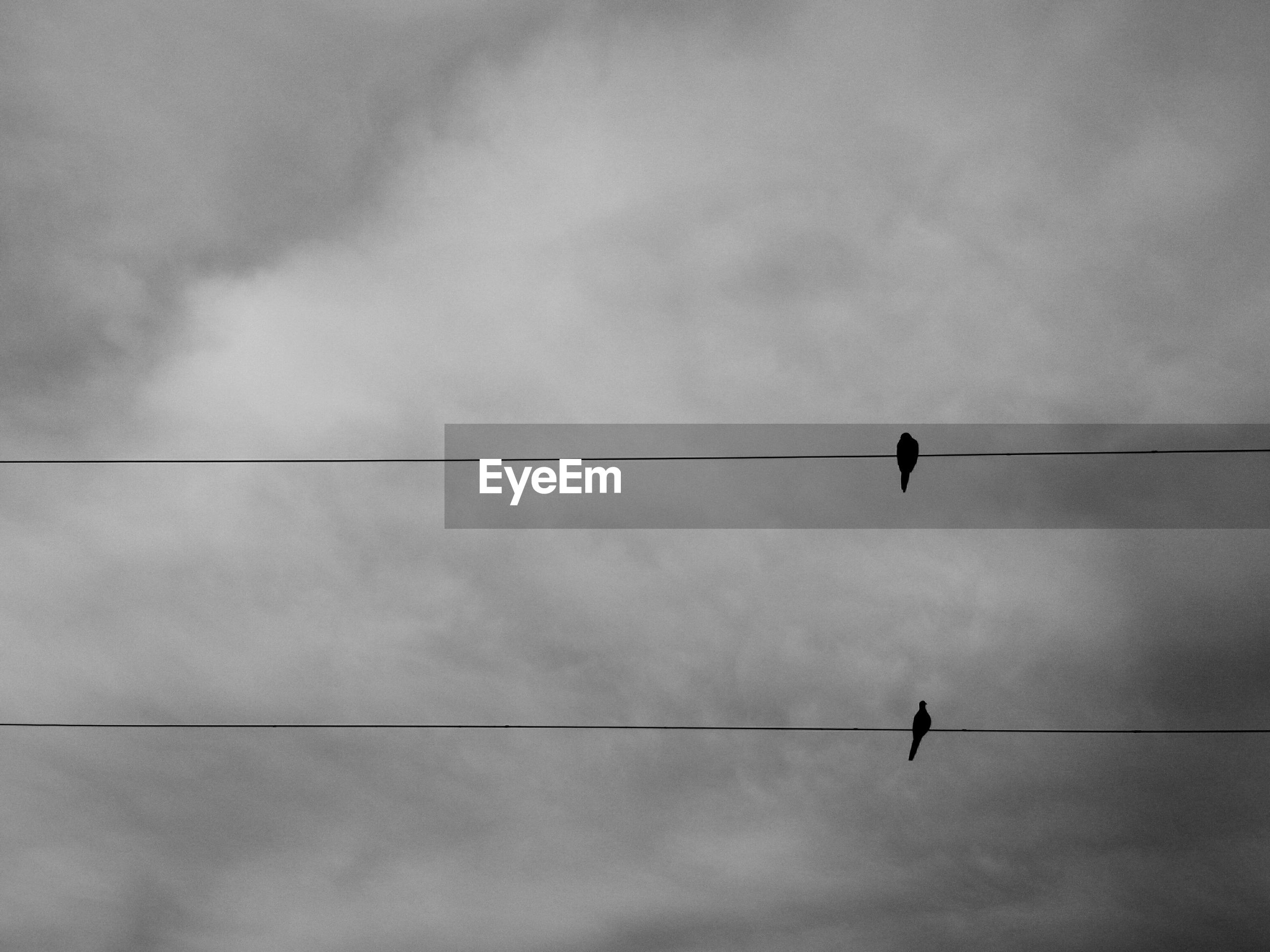Low angle view of birds on cables against clouds