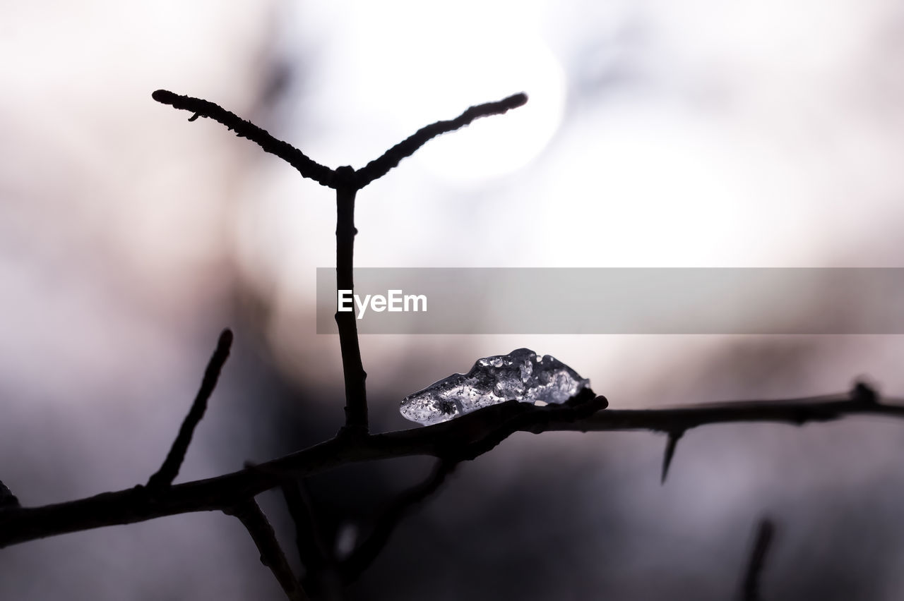 cold temperature, drop, ice, nature, outdoors, no people, winter, close-up, dried plant, day, water, branch, beauty in nature