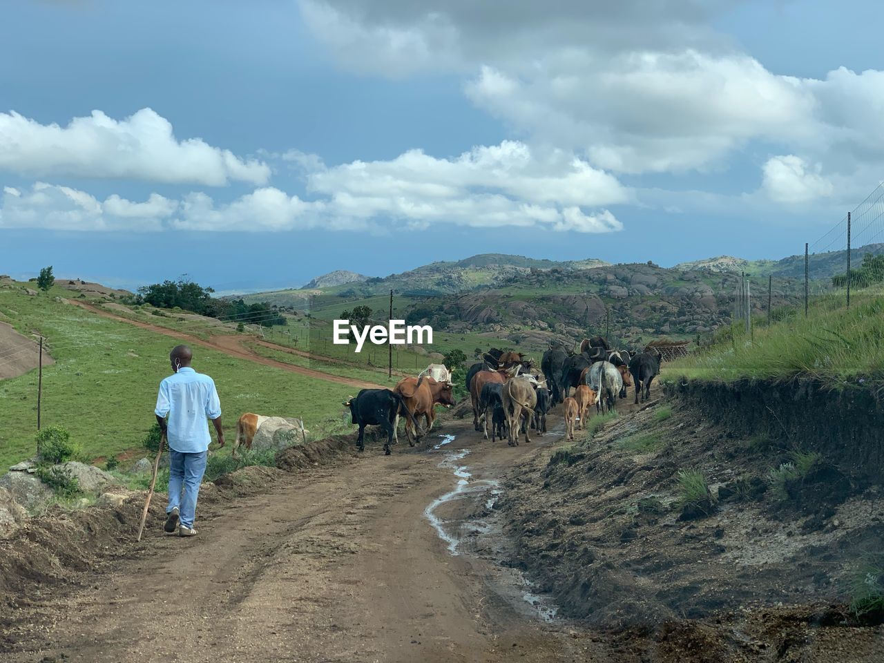 cloud - sky, mammal, domestic animals, livestock, domestic, pets, group of animals, sky, men, rear view, landscape, vertebrate, cattle, nature, full length, real people, environment, field, outdoors