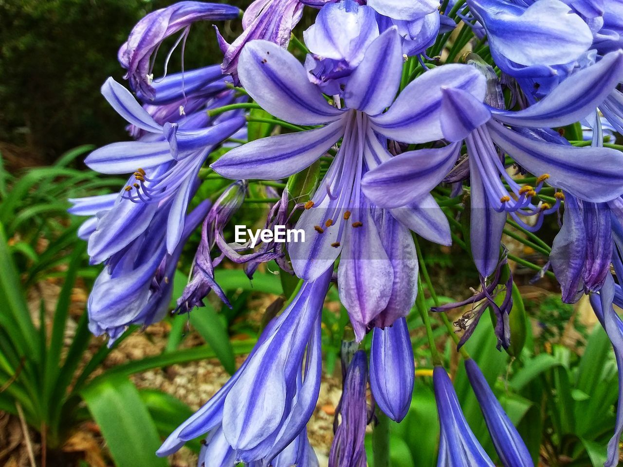 plant, flowering plant, flower, growth, beauty in nature, freshness, close-up, purple, fragility, petal, vulnerability, nature, day, inflorescence, flower head, no people, focus on foreground, botany, blossom, springtime