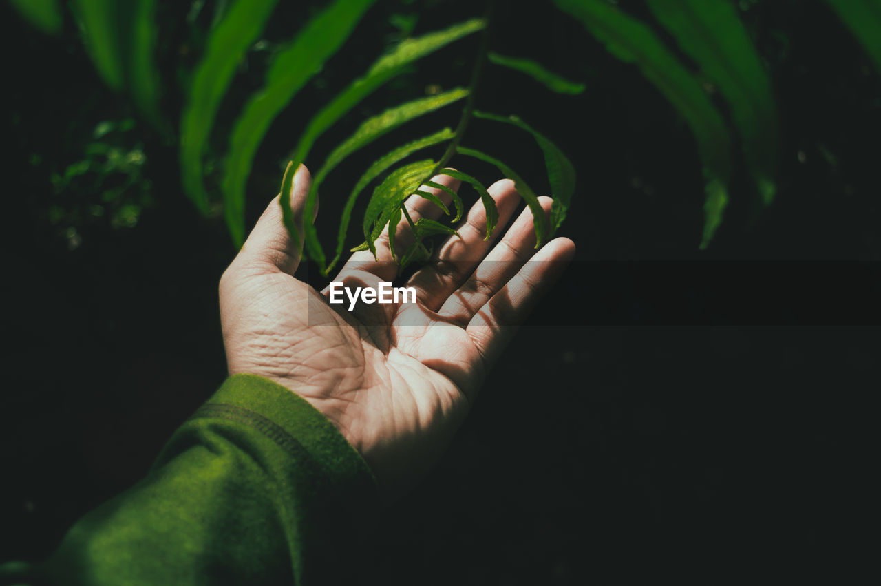 Cropped Image Of Hand Touching Leaves