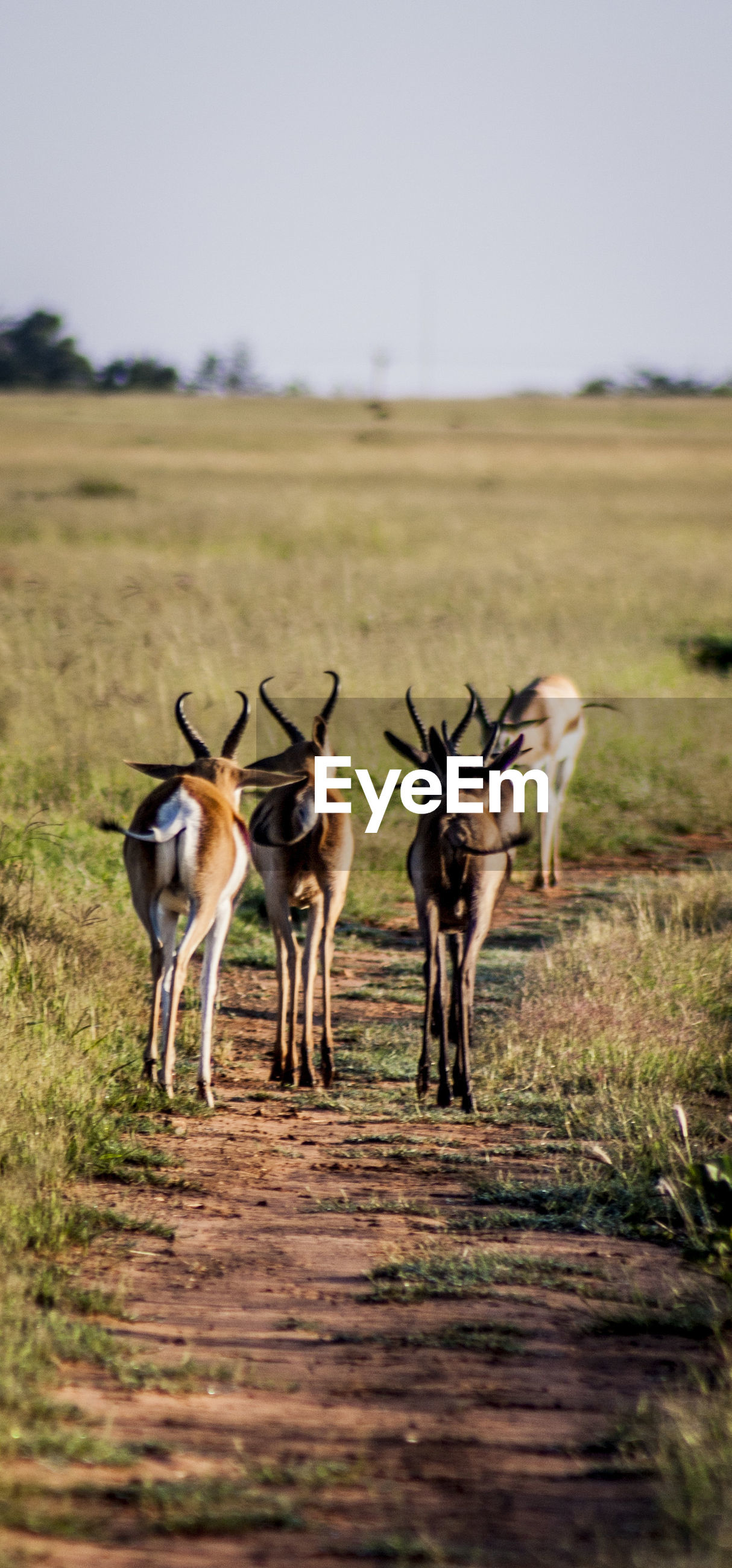 Animals walking on field