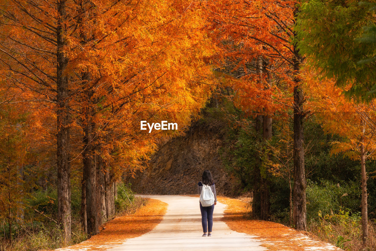 tree, autumn, full length, plant, rear view, one person, change, walking, orange color, nature, leisure activity, direction, real people, the way forward, lifestyles, day, footpath, plant part, casual clothing, outdoors, autumn collection